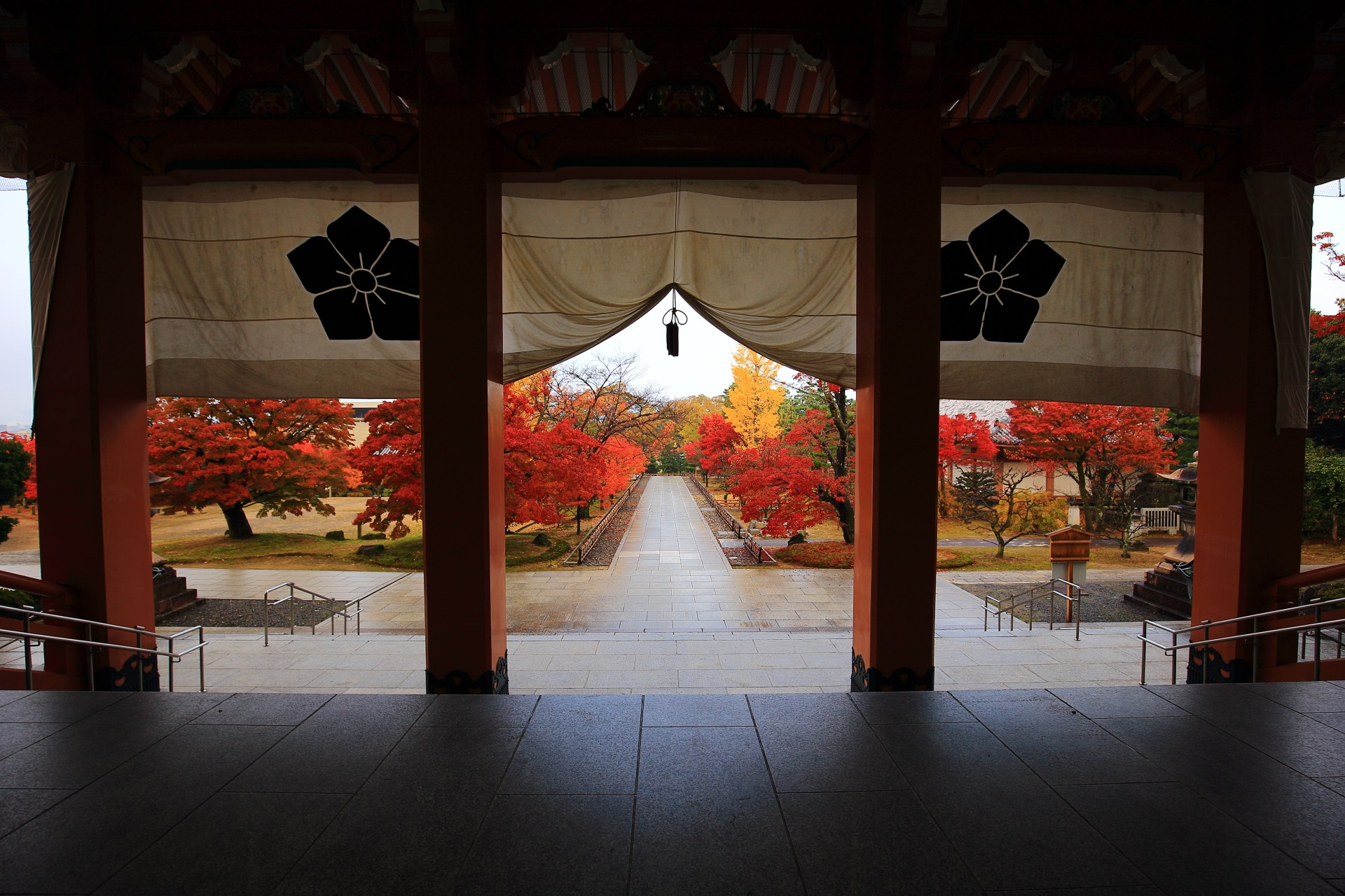 智積院の美しすぎる紅葉や秋色の情景