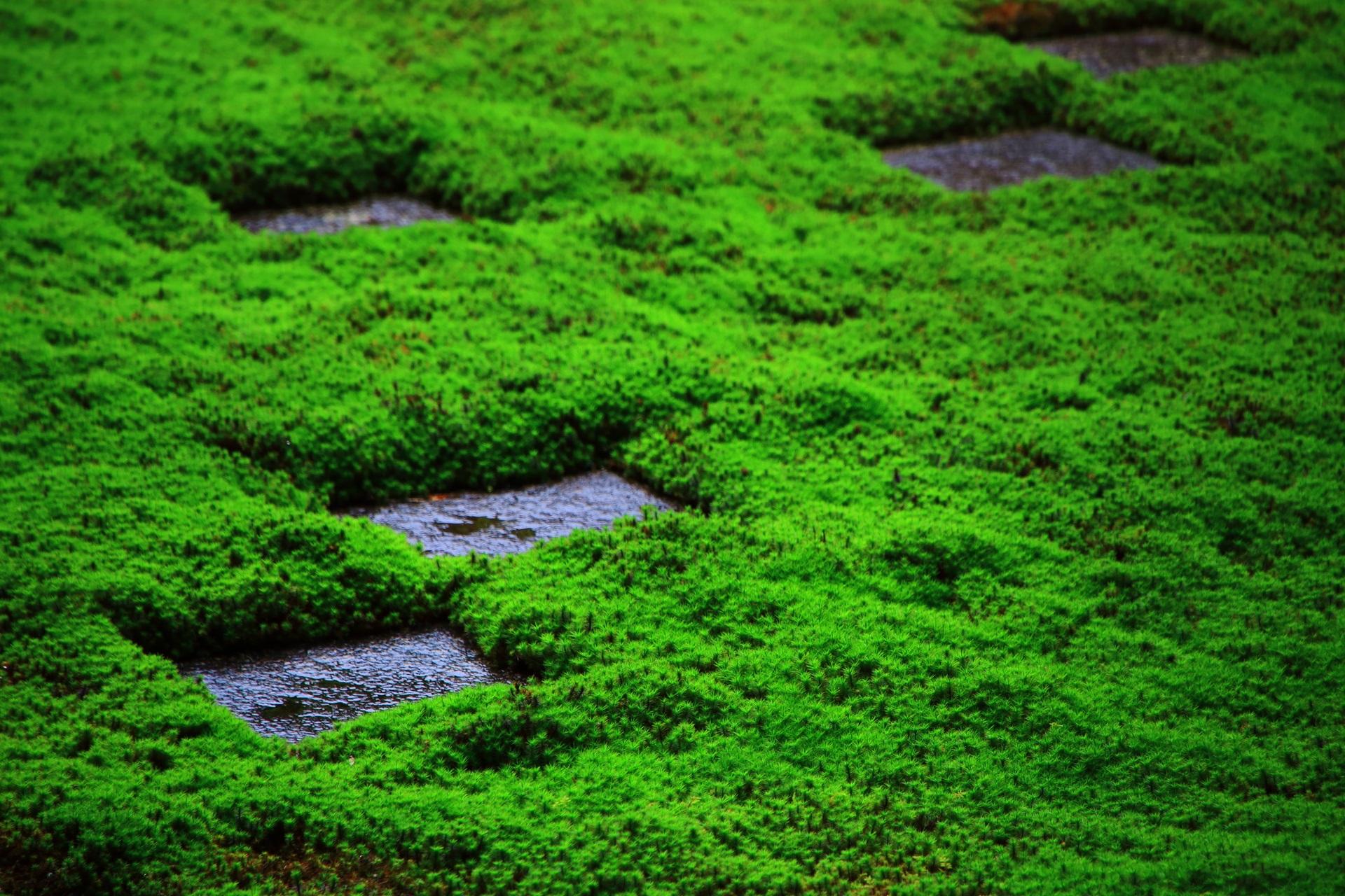 雨で潤う東福寺の庭園