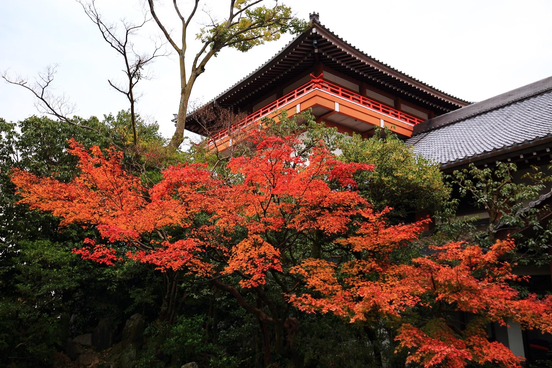 本法寺の凛として佇む宝物館を秋色に染めるオレンジの紅葉