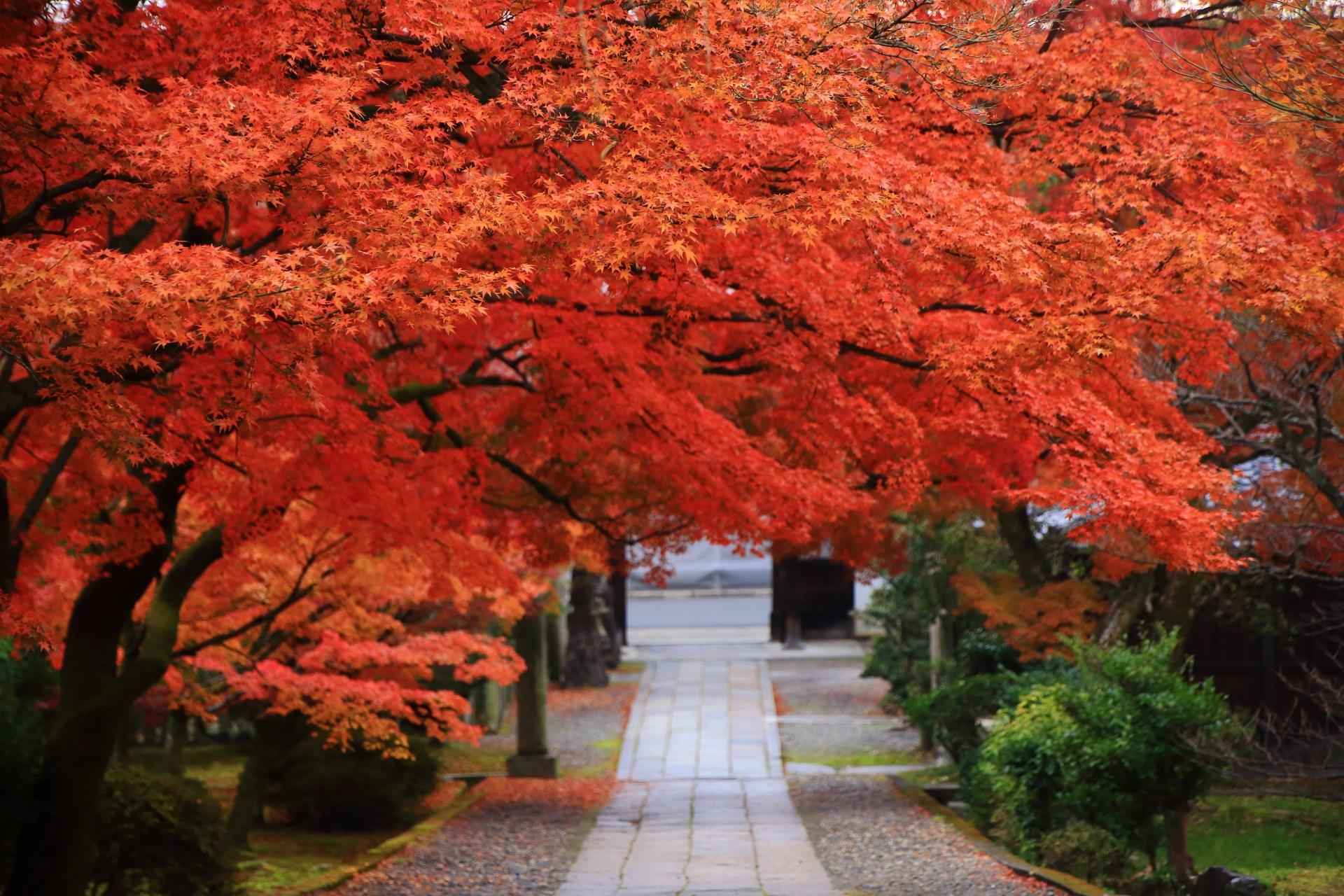 養源院の秋色につつまれた極上の参道