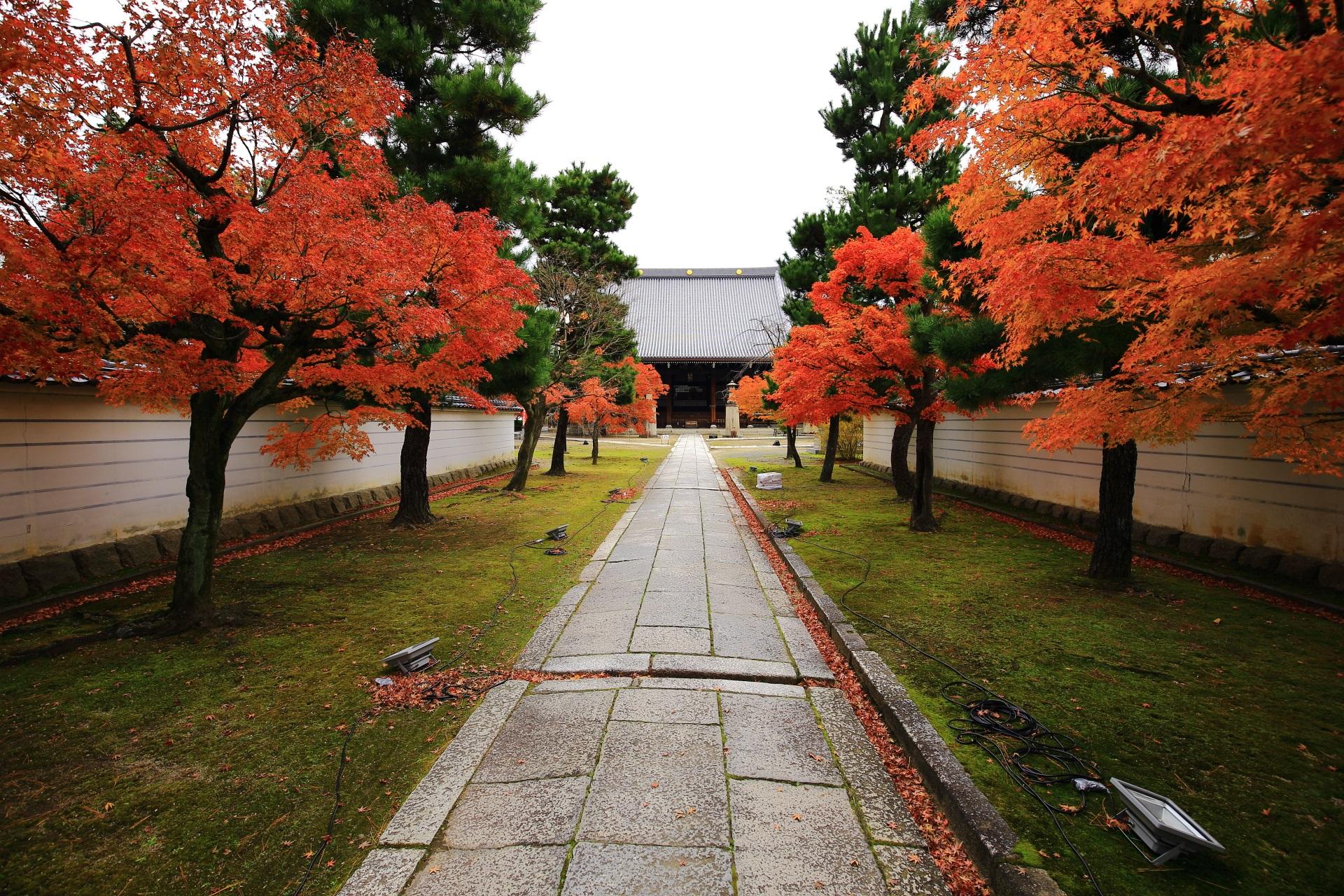 色づきが更に深まった妙顕寺の参道と本堂を彩る紅葉