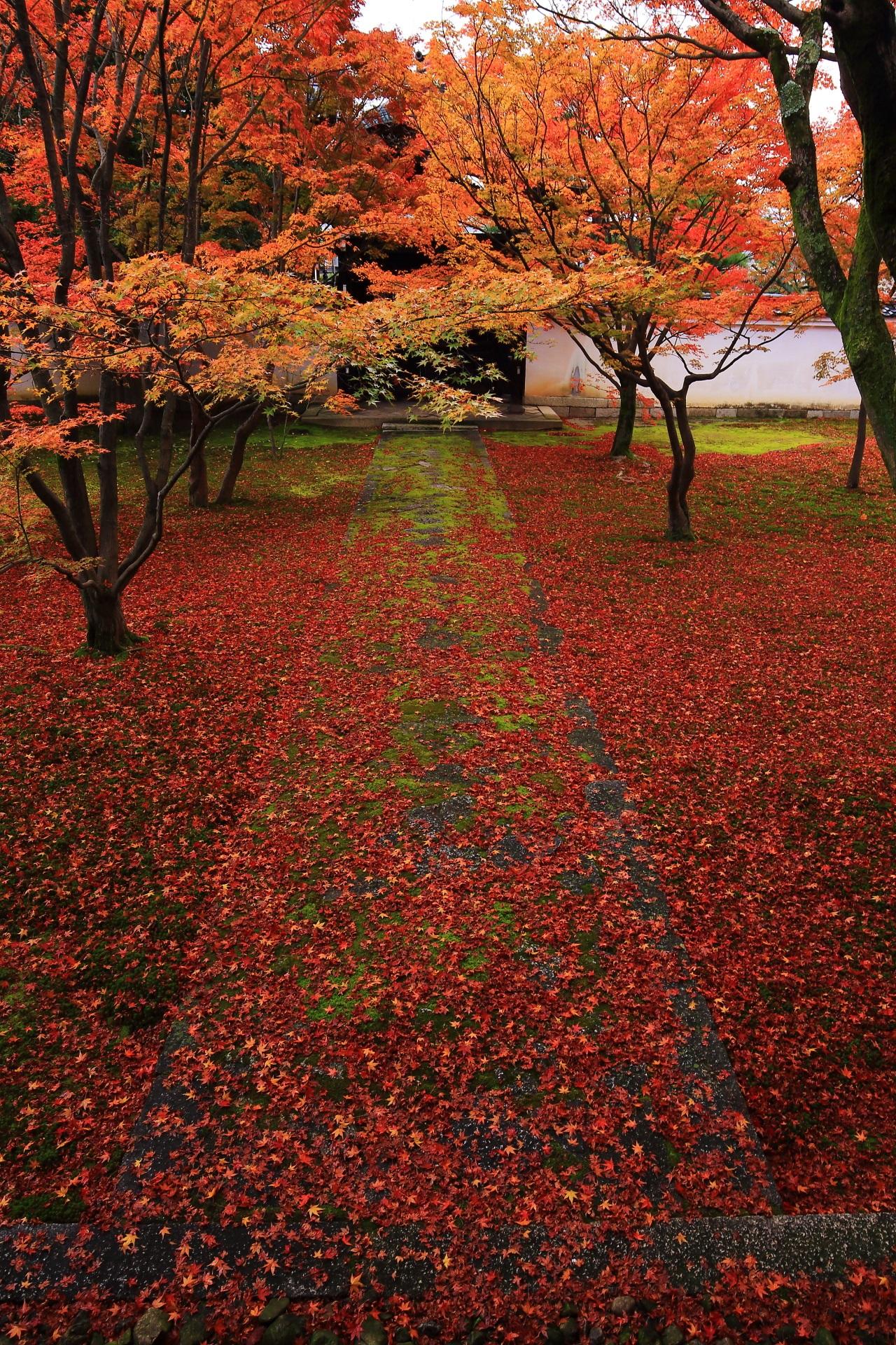 妙覚寺の素晴らしい紅葉や散り紅葉と秋の情景