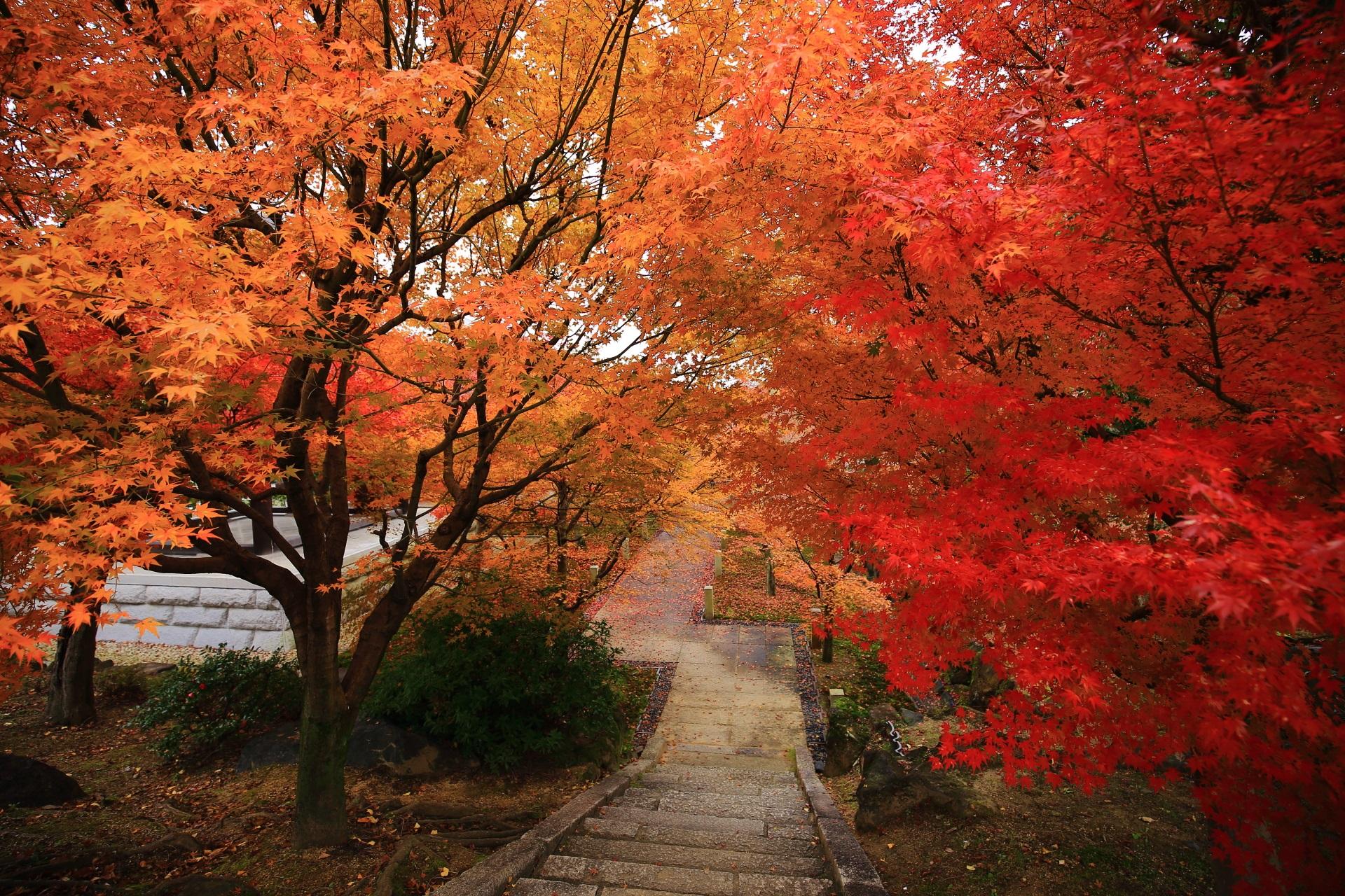 智積院の鐘楼横の美しすぎる紅葉につつまれた石段
