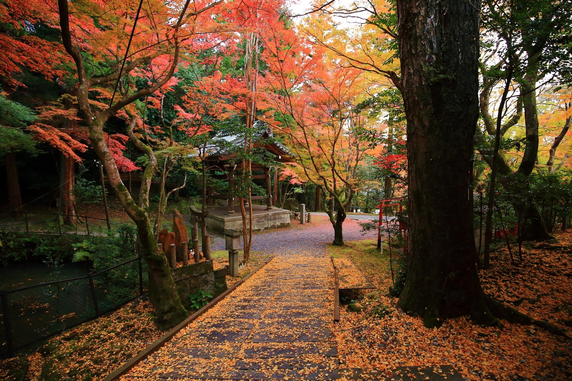 鮮やかな秋色につつまれた鐘楼と散り銀杏