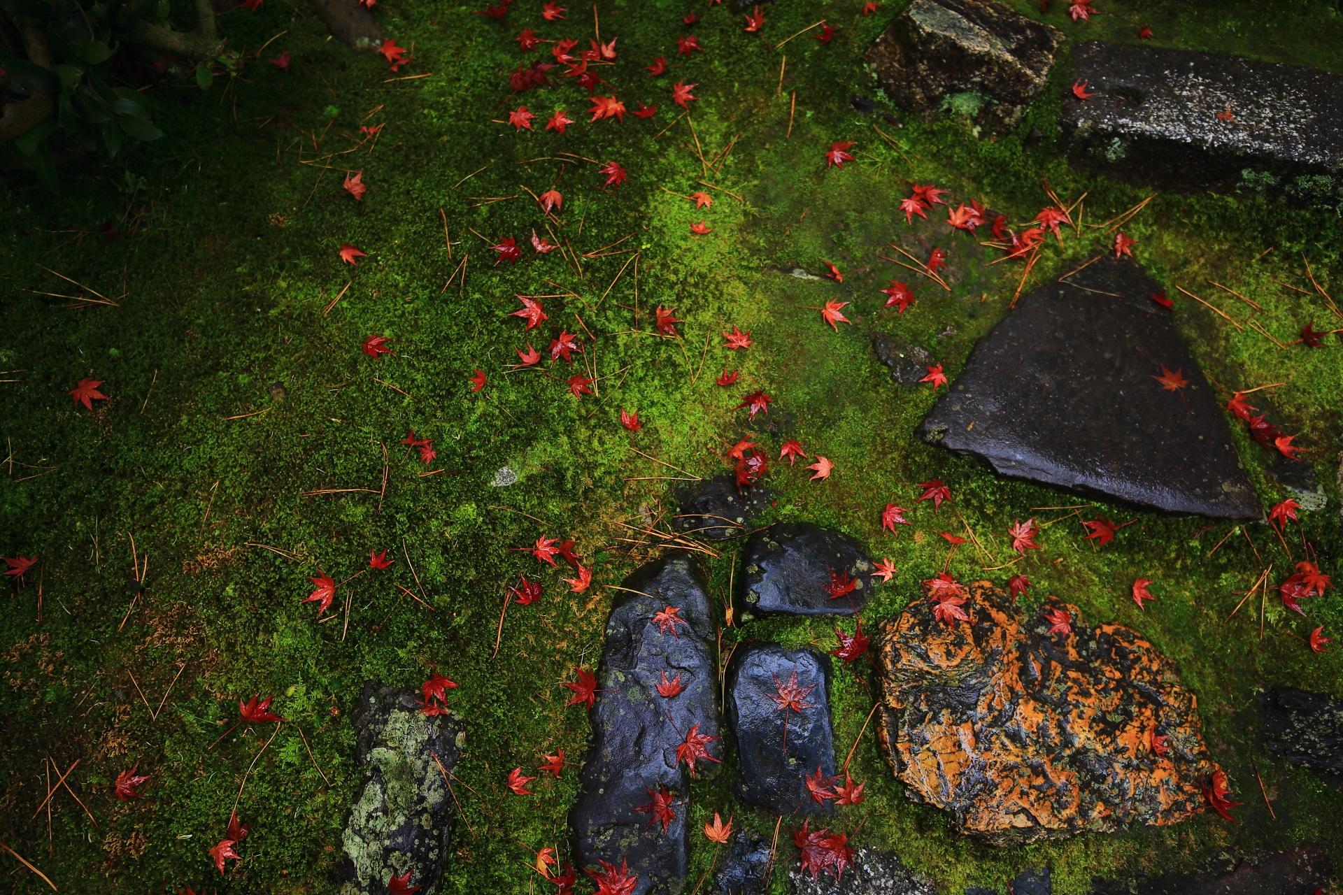 雨に濡れた苔や岩を秋色に染める桂春院の散り紅葉
