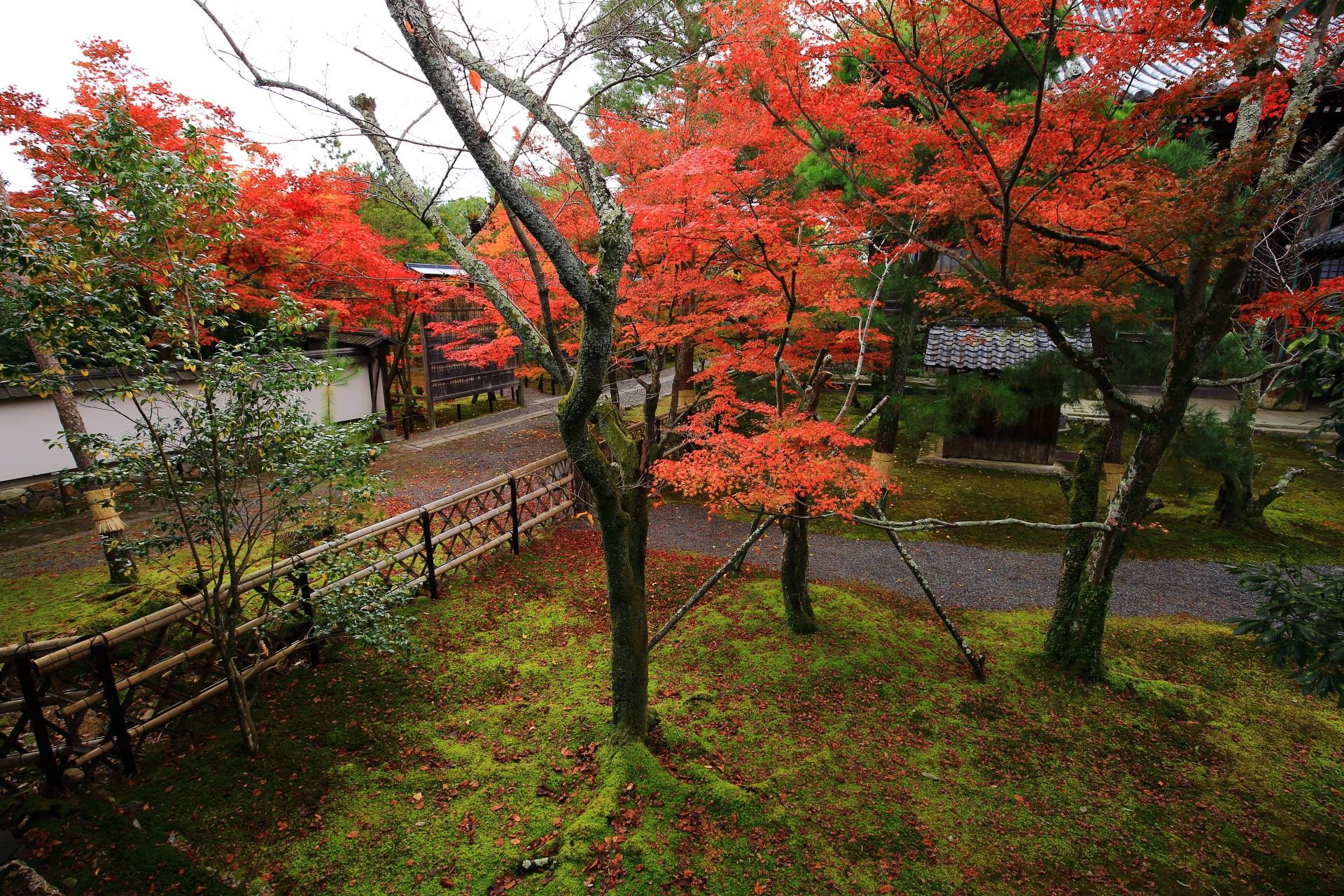 緑の苔に映える豪快に色づく紅葉