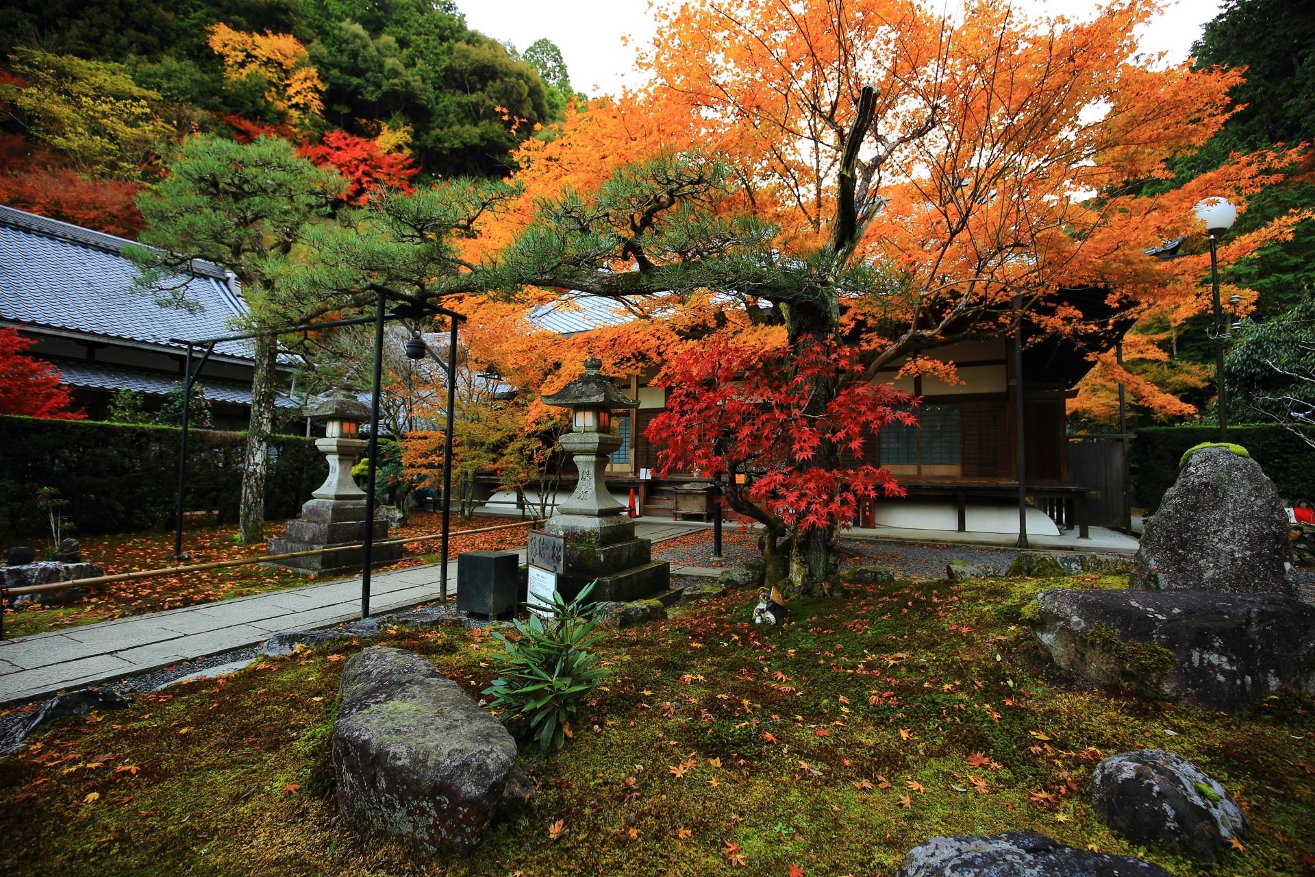 百日紅の木と一体化して育った珍しい松である縁結びの松と紅葉