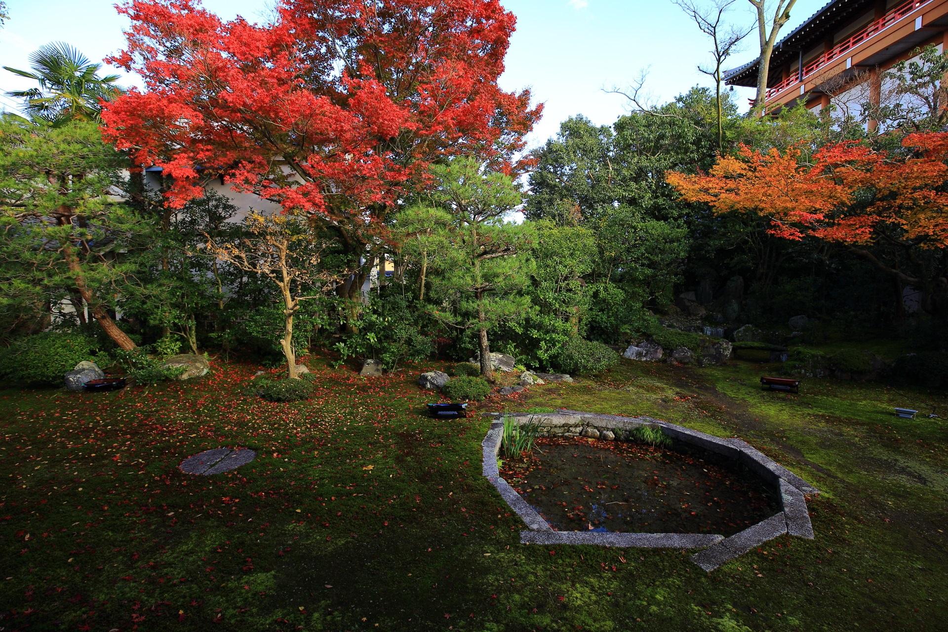 本法寺の緑の巴の庭を彩る鮮やかな赤色とオレンジ色の紅葉