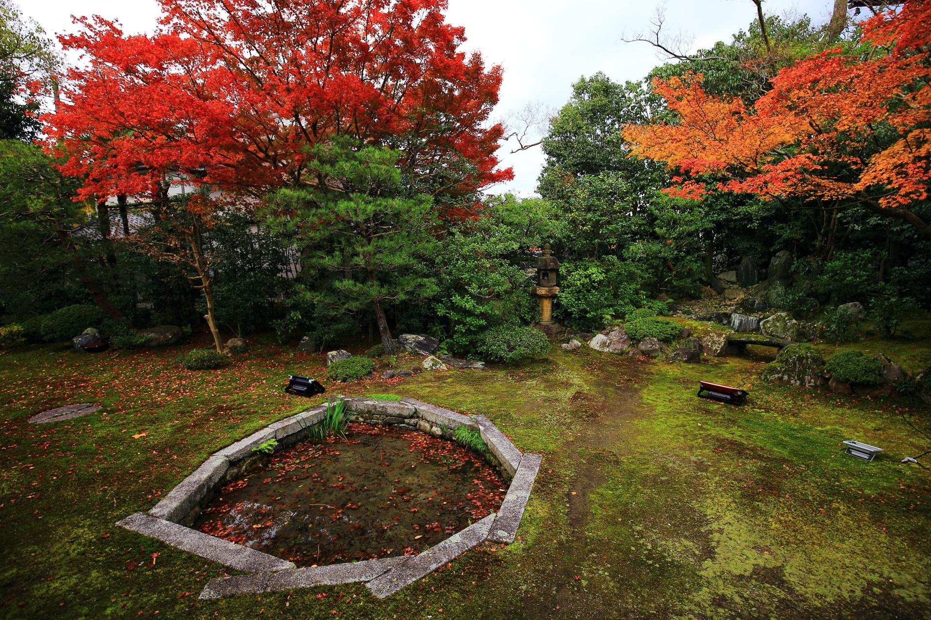 本法寺の多種多様な深い緑や岩に映える華やかな紅葉