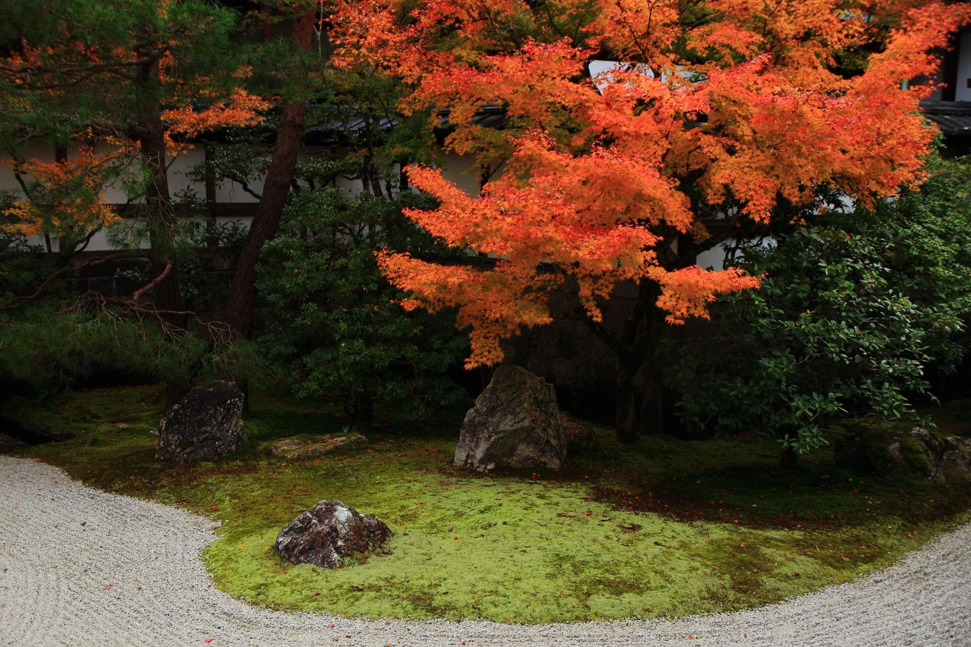 多種多様な緑をつつむ見事に色づく紅葉