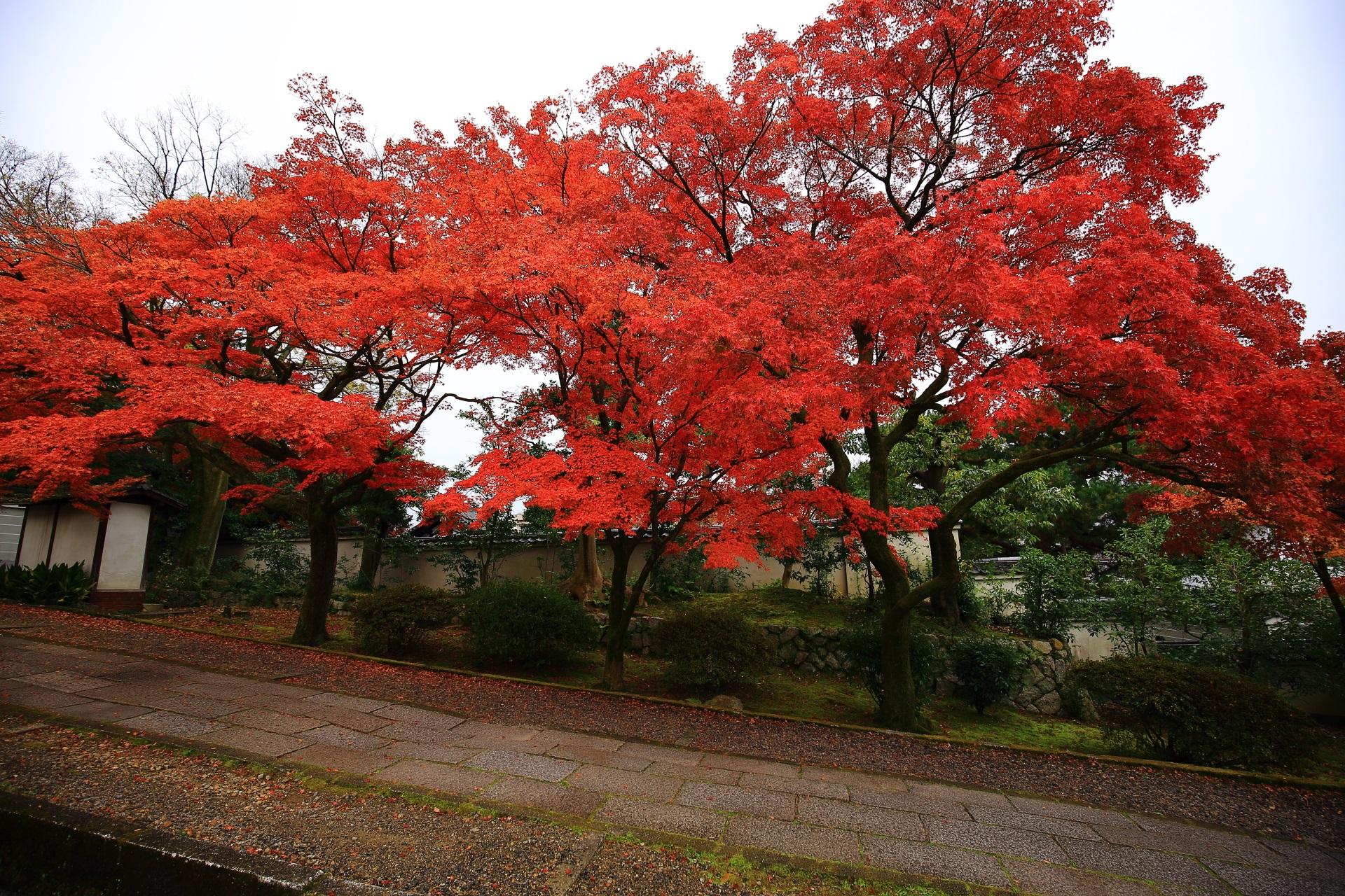 緩やかな参道に立ち並ぶ豪華な紅葉