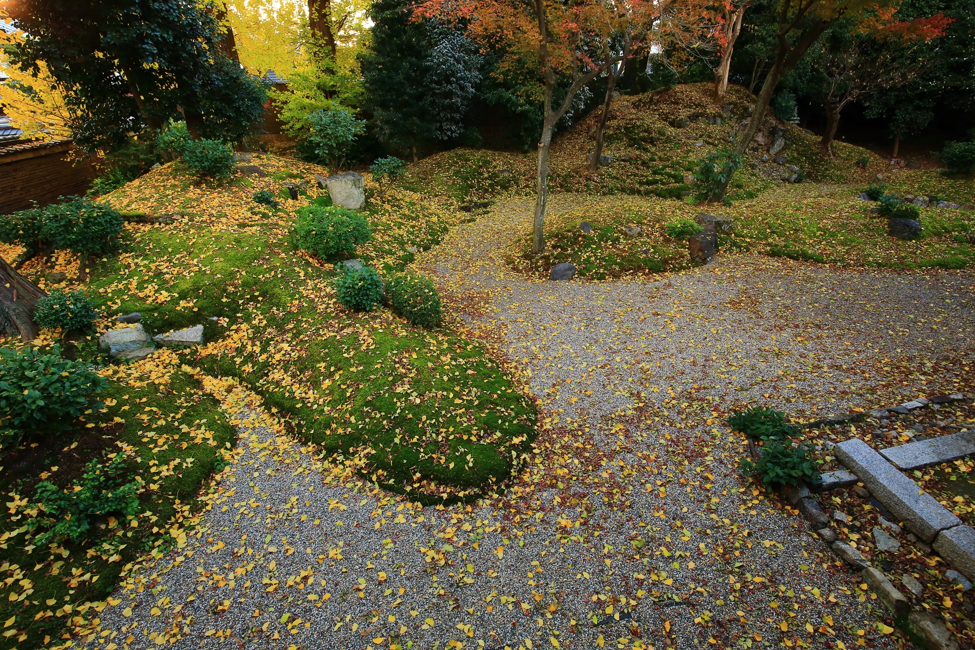 立本寺の落ち着いた庭園を染める豪快な散り銀杏