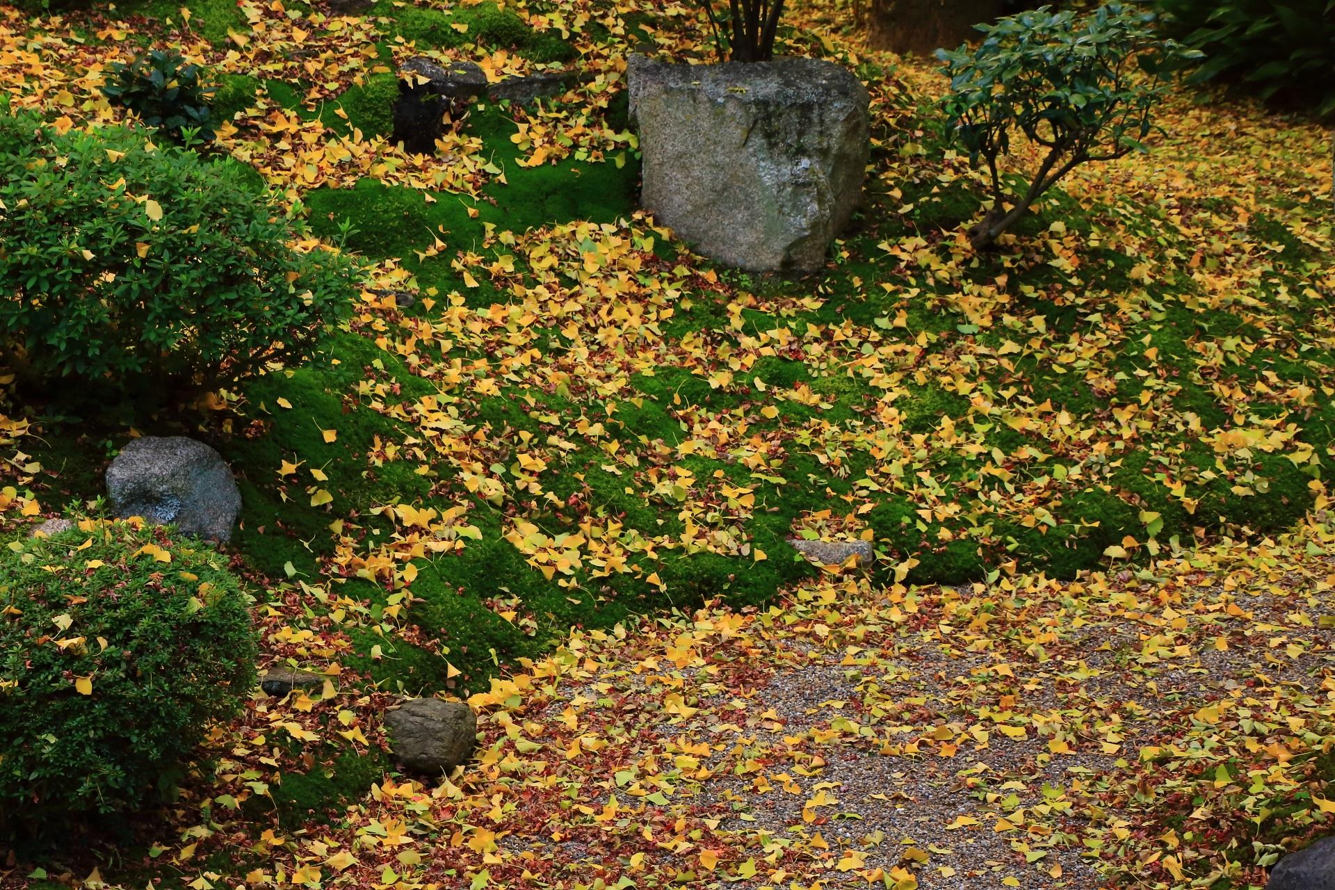 立本寺の美しい緑の苔を染める華やかな黄色い「散り」