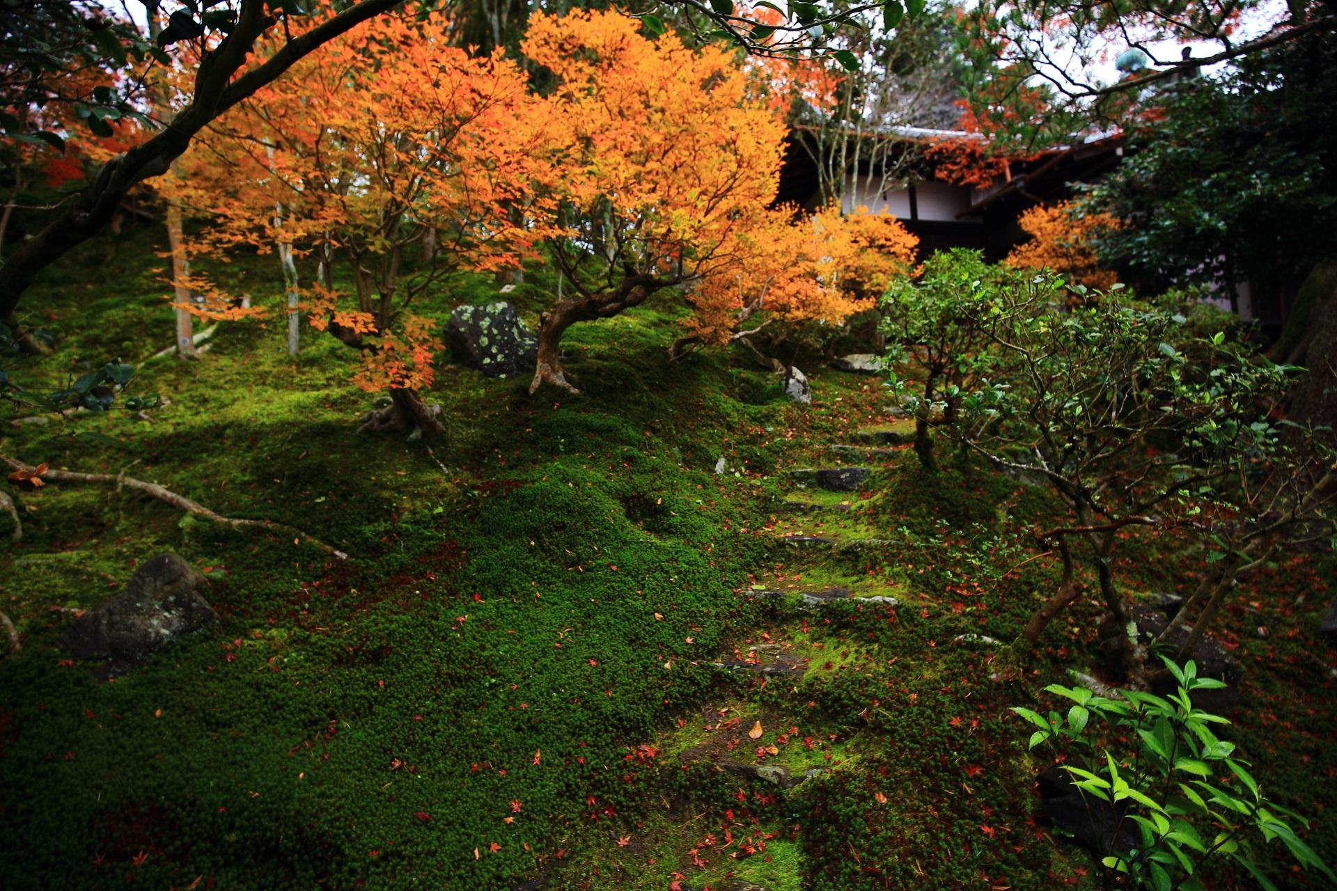 苔に覆われた石段と華やかな紅葉