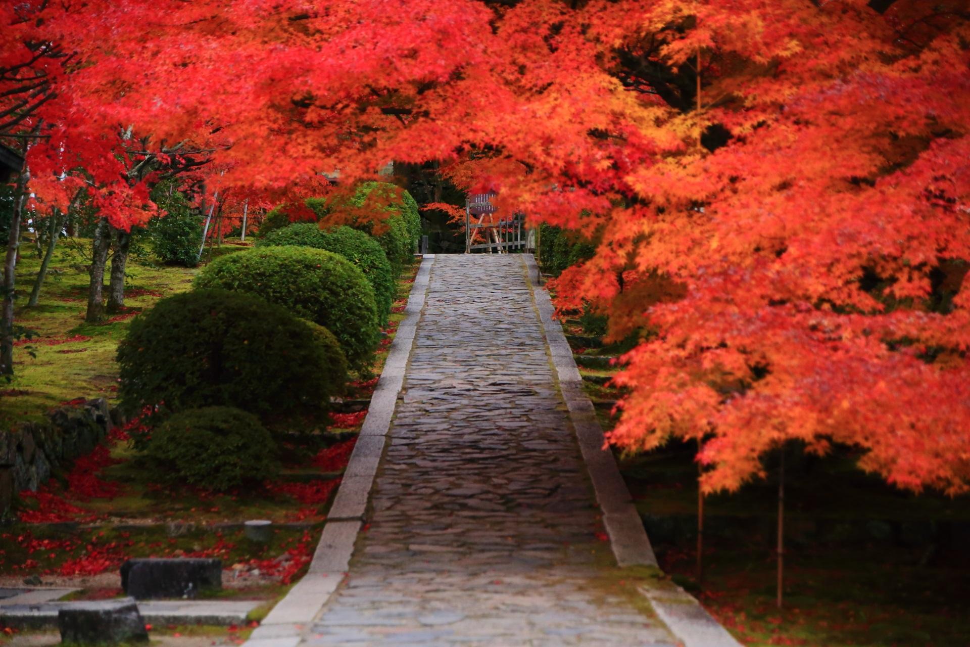 静けさの中に燃え上がる紅葉
