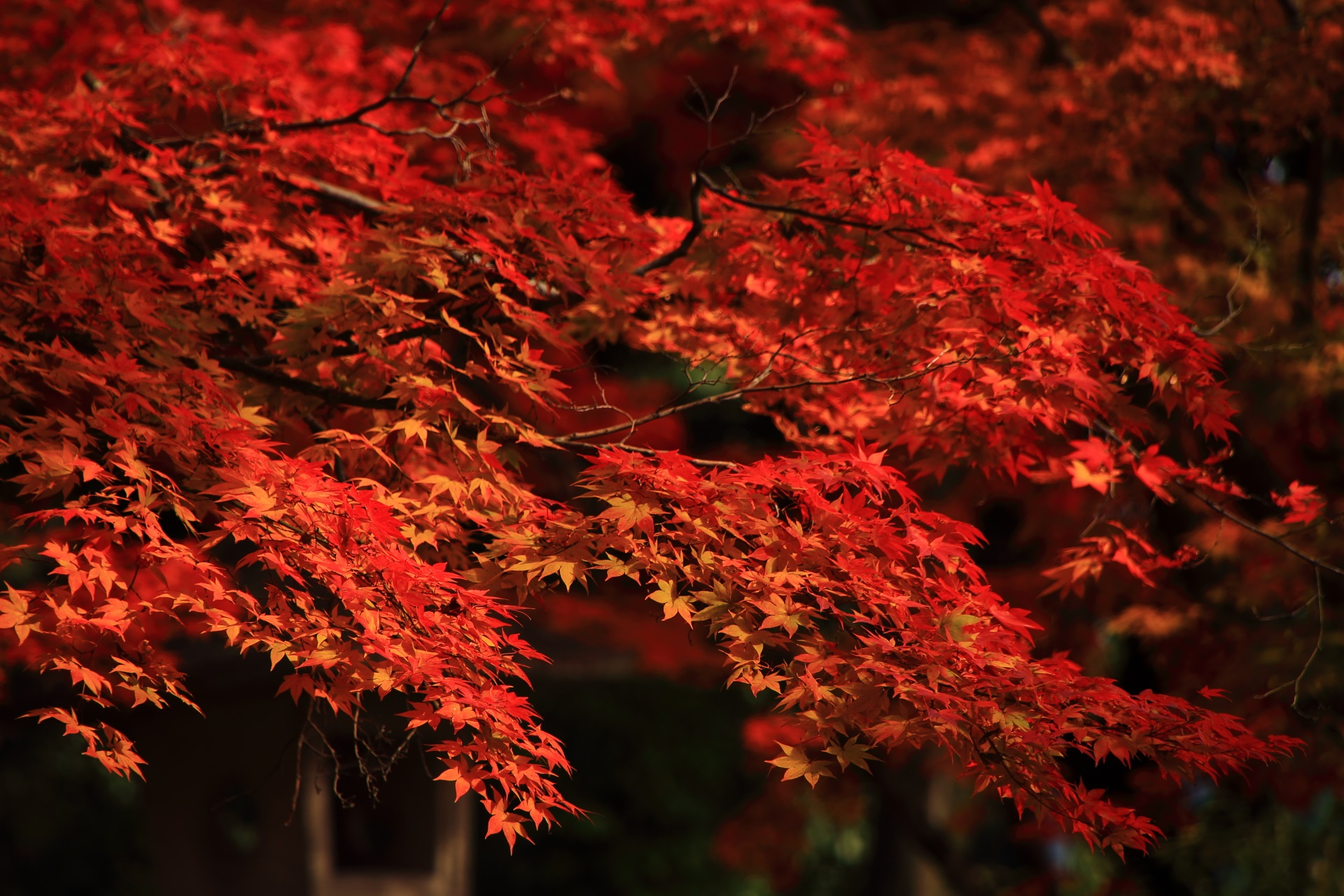 竹中稲荷神社の秋風に揺らぐ華やかな紅葉