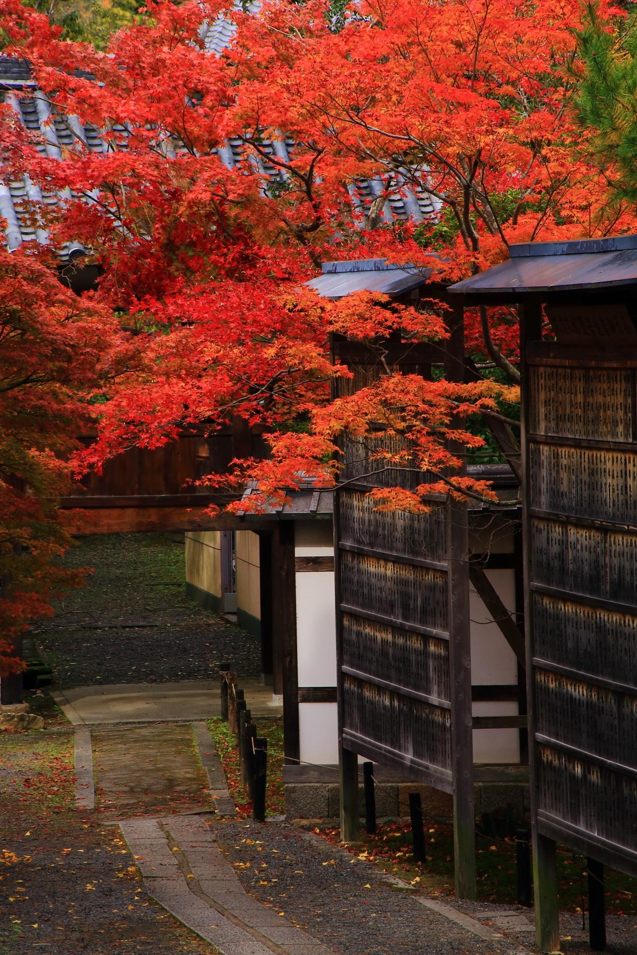 高画質 写真 紅葉 清涼寺