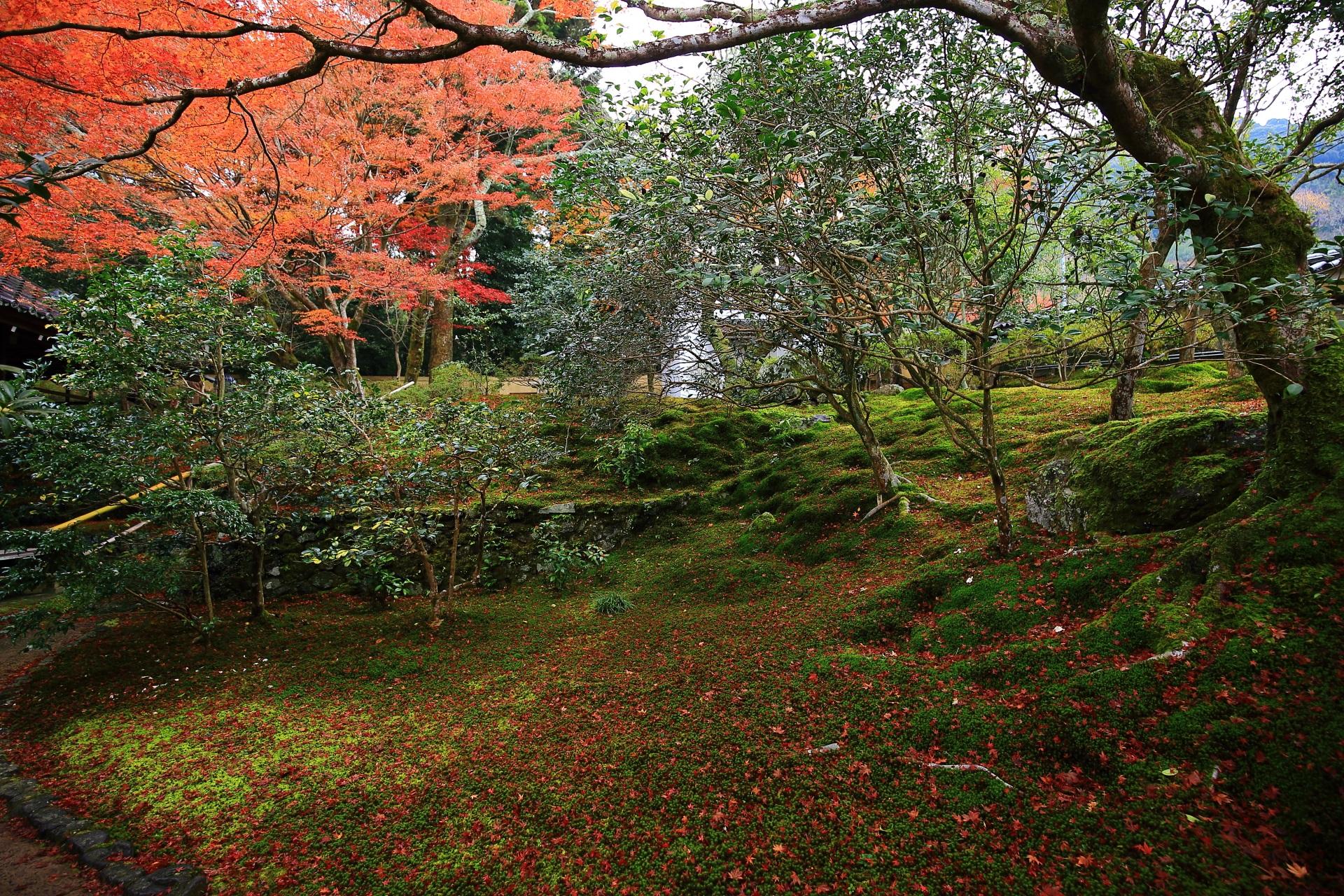 霊鑑寺の本堂前の紅葉や苔の散りもみじ