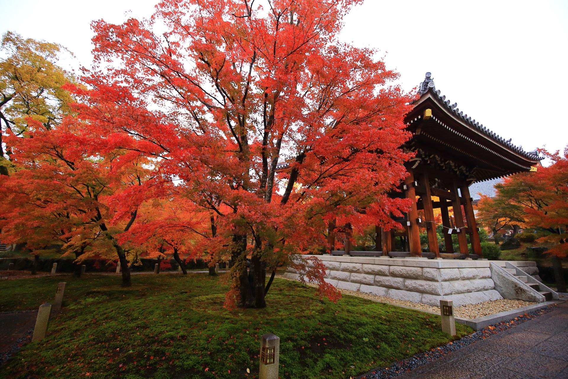 智積院の鐘楼と苔を染める絵になる紅葉