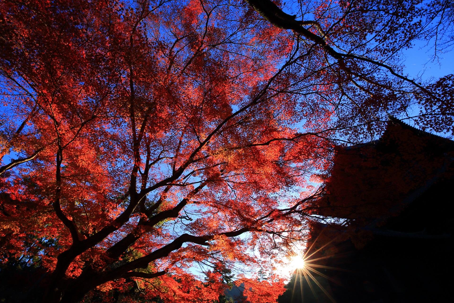 青空と三門を彩る煌びやかで真っ赤な紅葉と太陽