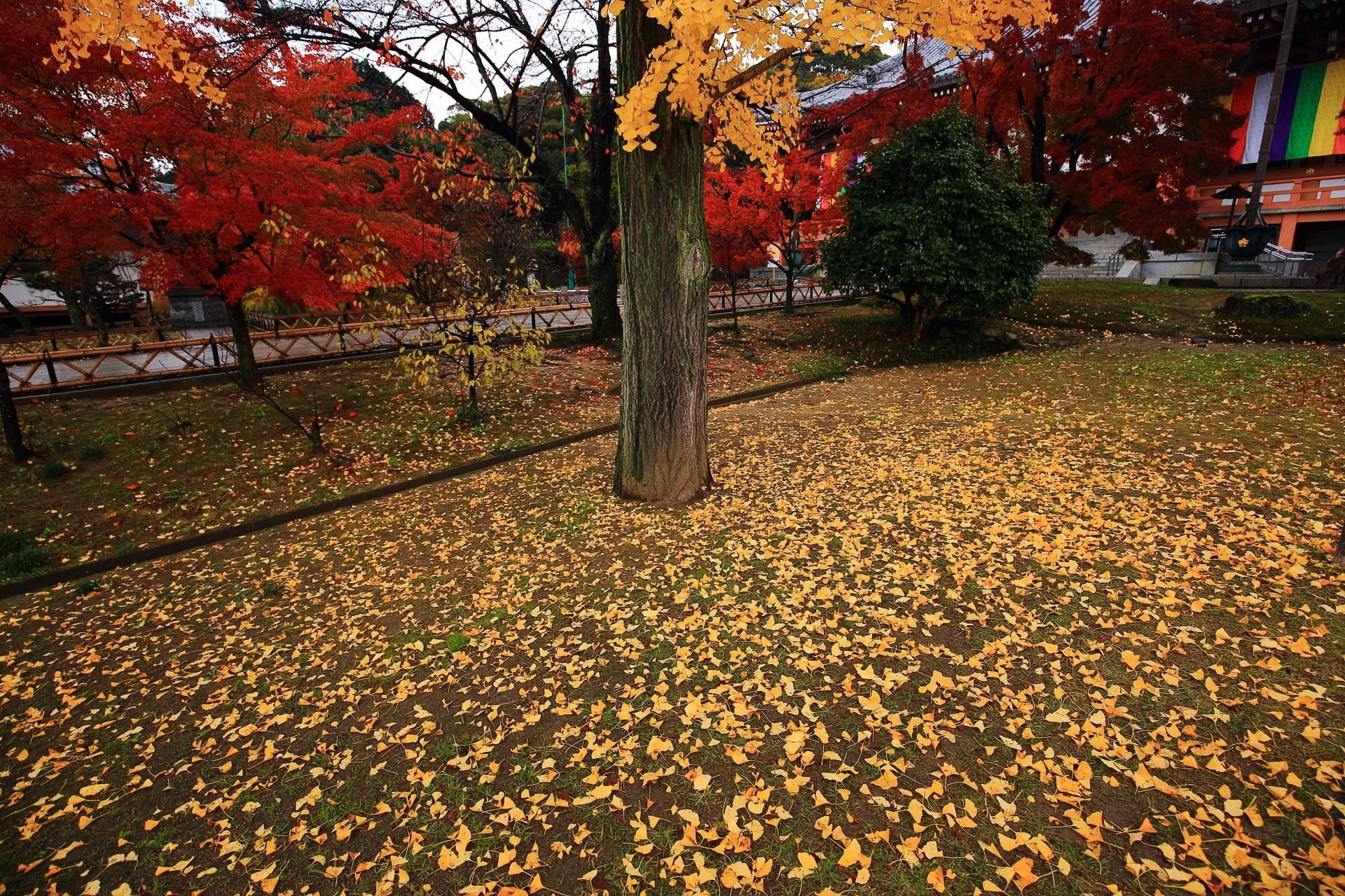 智積院の金堂前の散り銀杏と鮮やかな紅葉