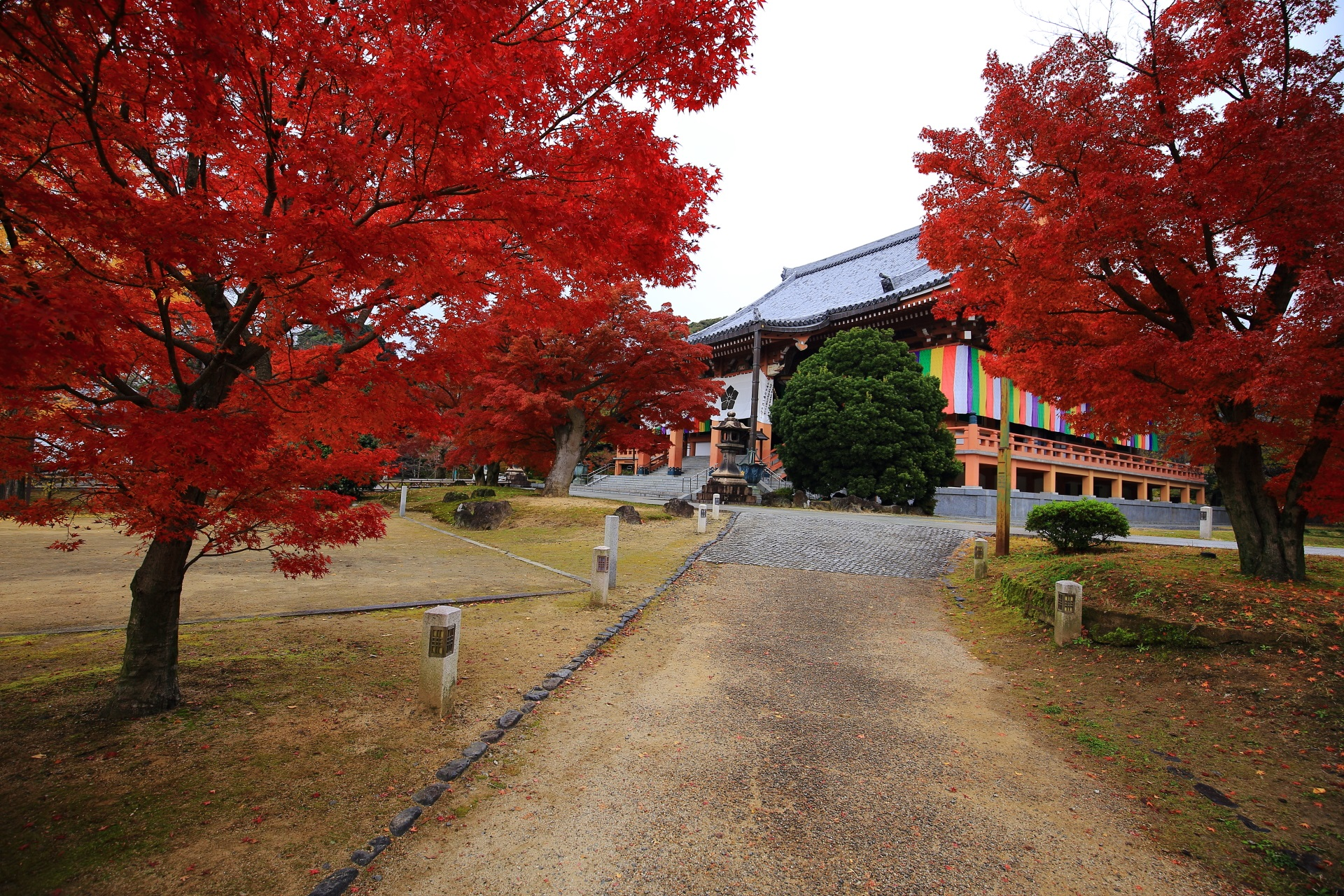さらに深く濃く色づいた金堂前の紅葉