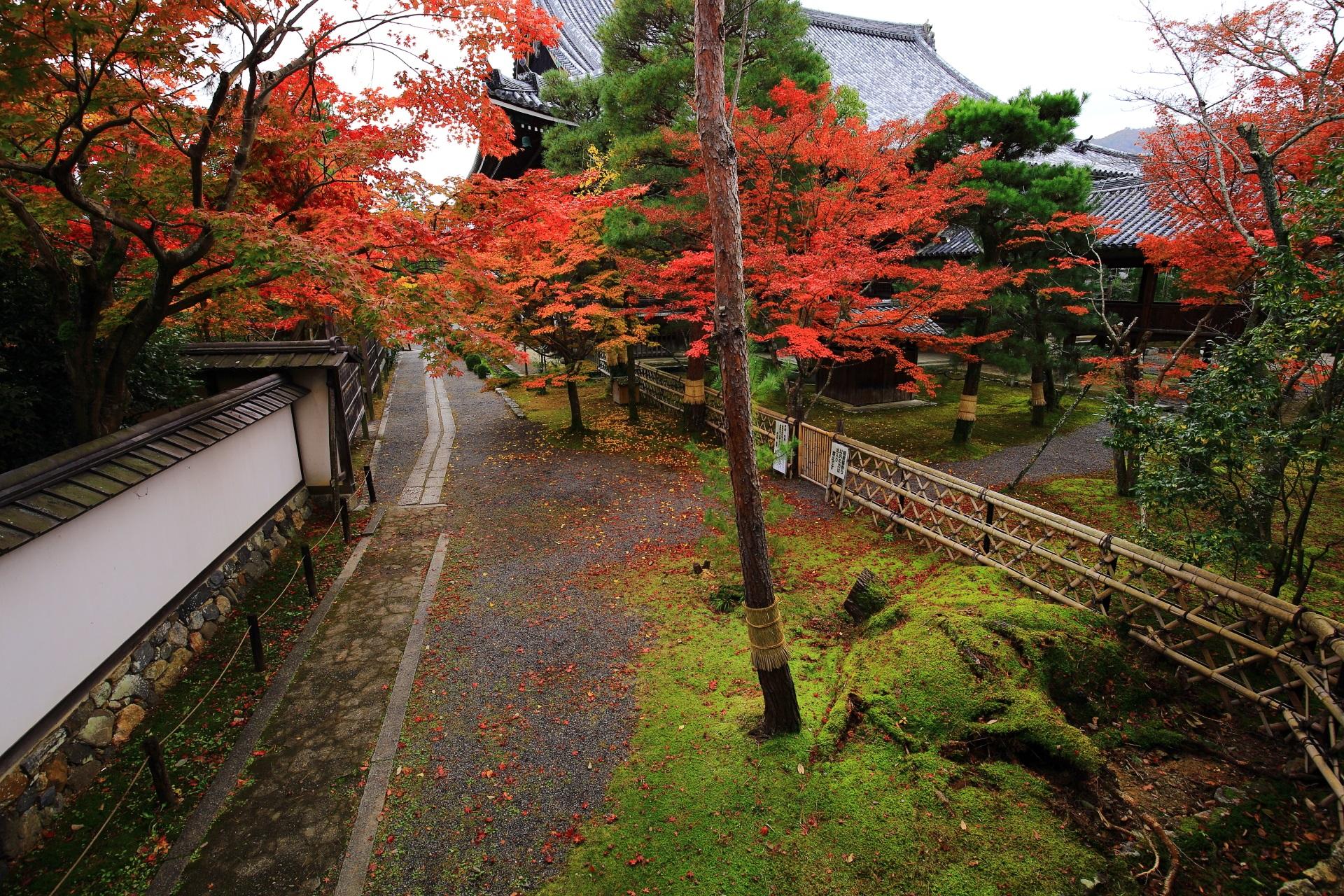 渡り廊下から眺める秋色にそまった本堂と参道や苔の庭園