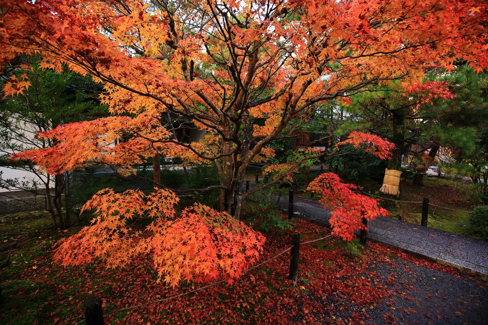 深い秋色に包まれた境内
