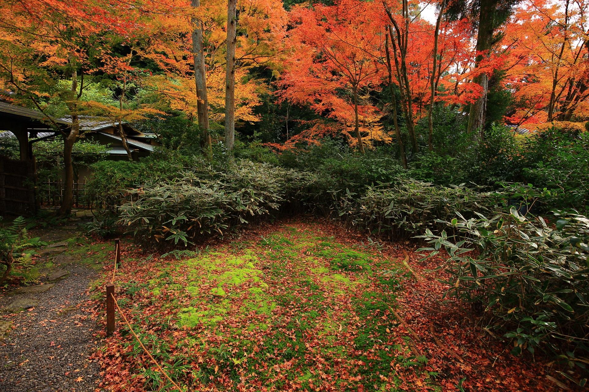来迎院の含翆庭の散り紅葉