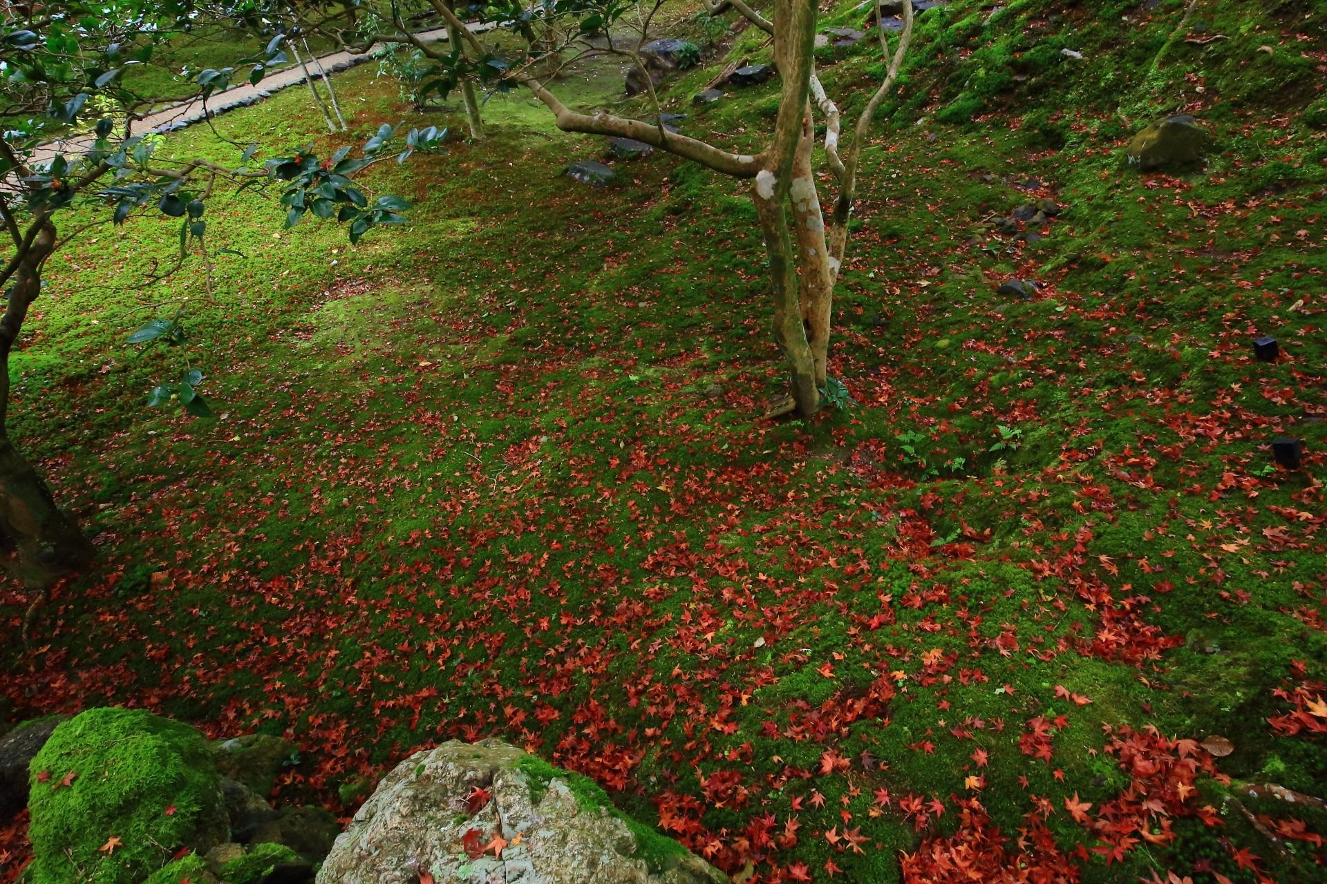 広がる苔と一面を華やぐ散り紅葉