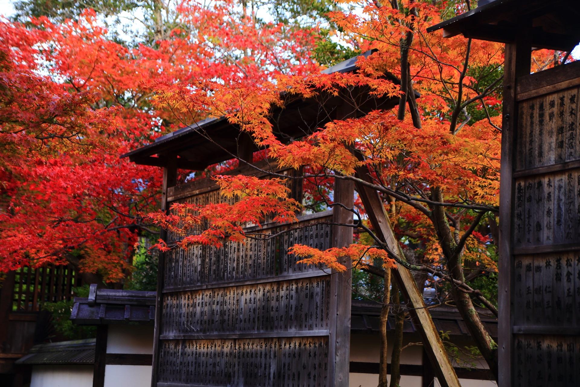 素晴らしい色づきの溢れ出す紅葉