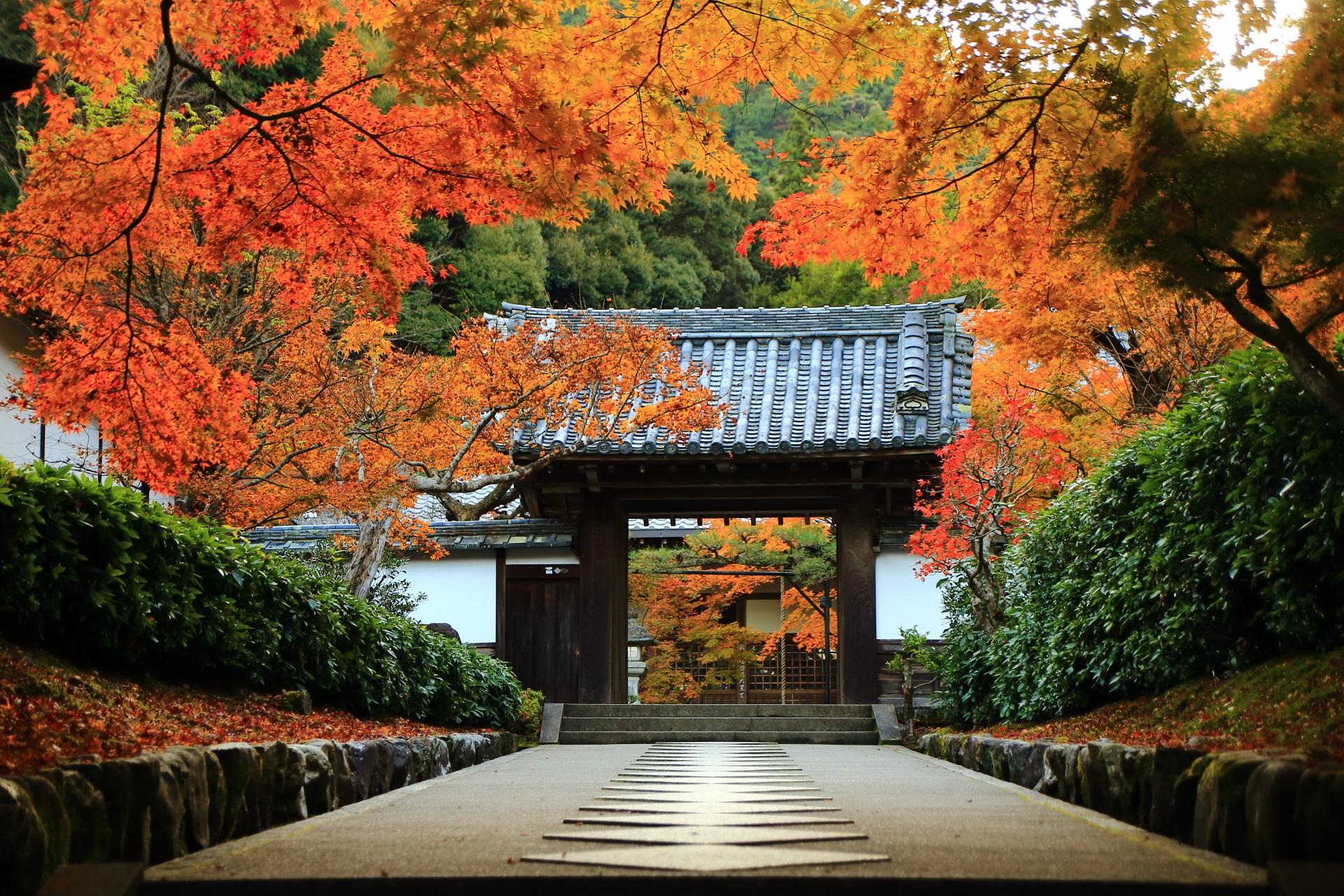 最勝院の絵になりすぎる山門前の参道と紅葉