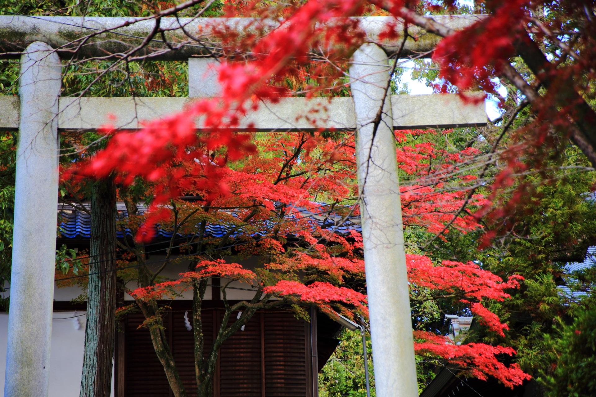 鳥居の奥に広がる淡い秋色