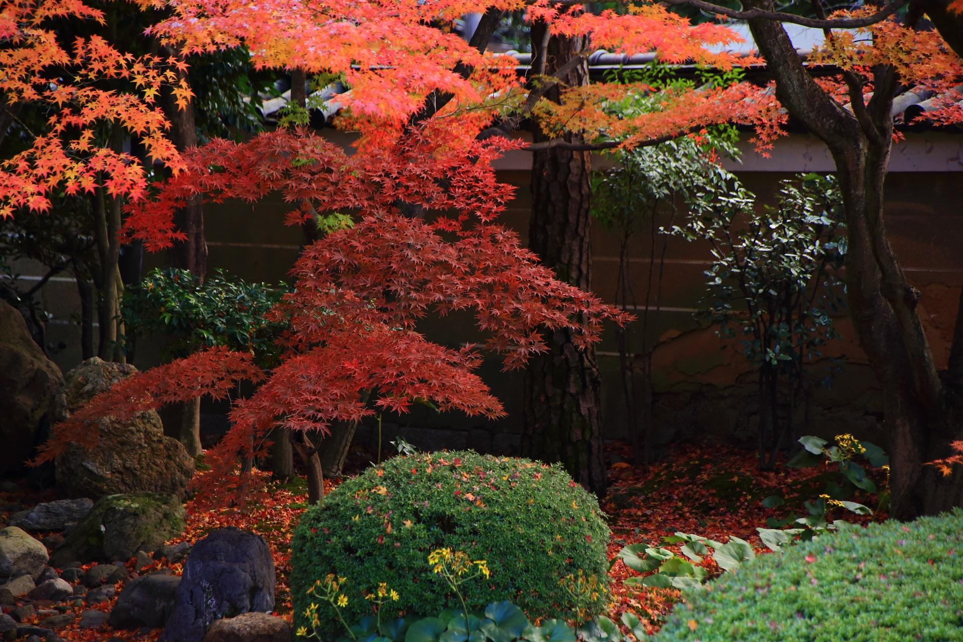 良く見ると多様な木々や緑と多彩な紅葉で構成されている妙顕寺庭園