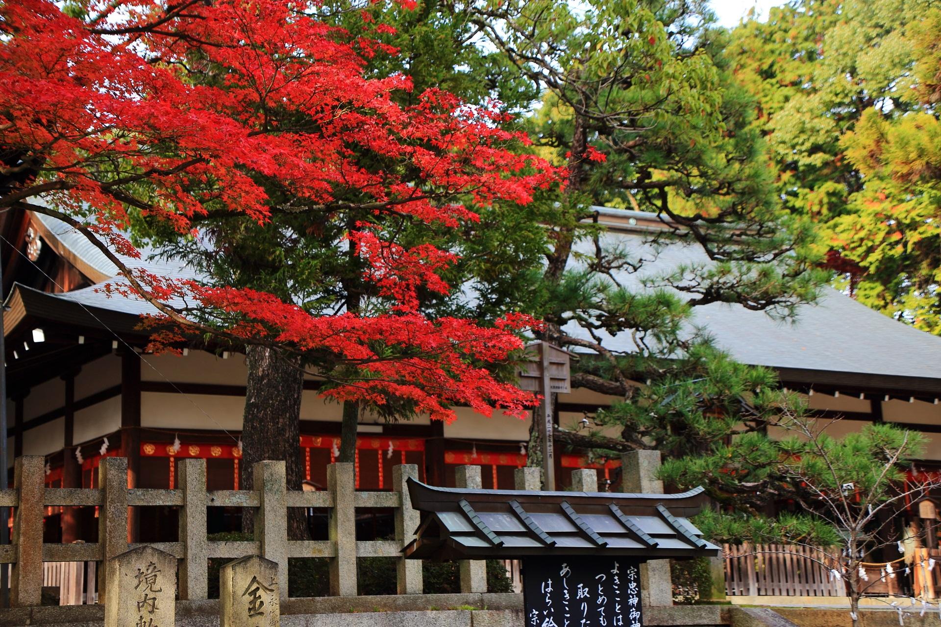 拝殿と更に色づきが濃くなった真っ赤な紅葉