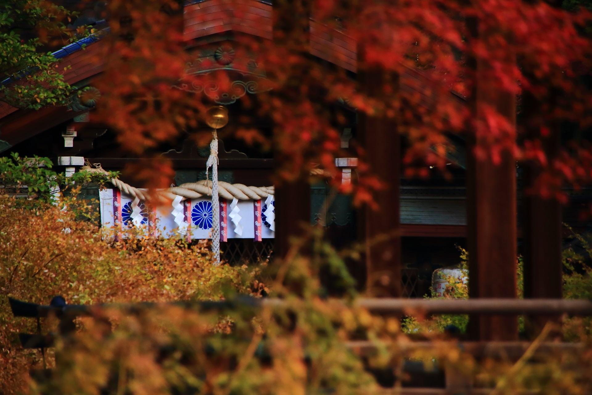 本殿を華やぐ鮮やかな紅葉や淡く色づいた萩