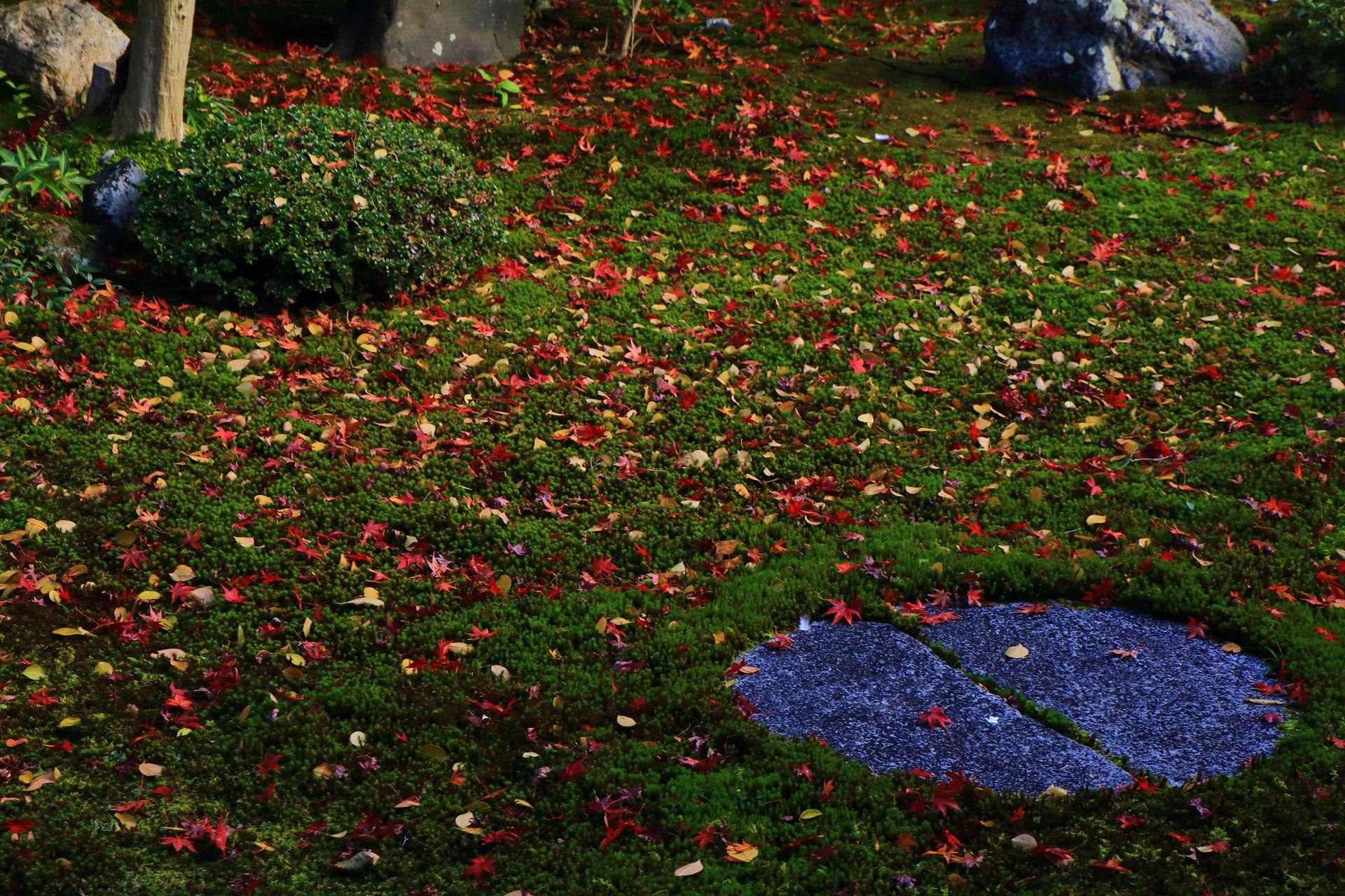 本法寺のもみじや楓以外の多様な木々や植物の散り