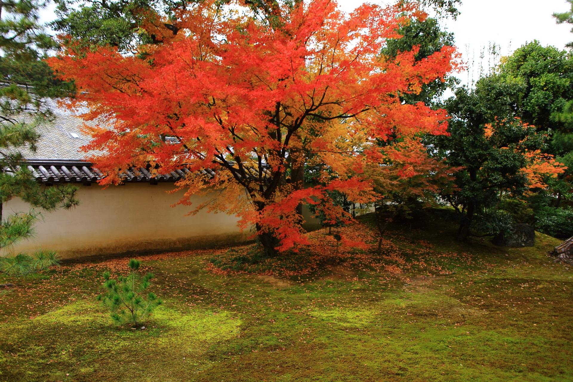緑の苔に映える美しい色合いの紅葉