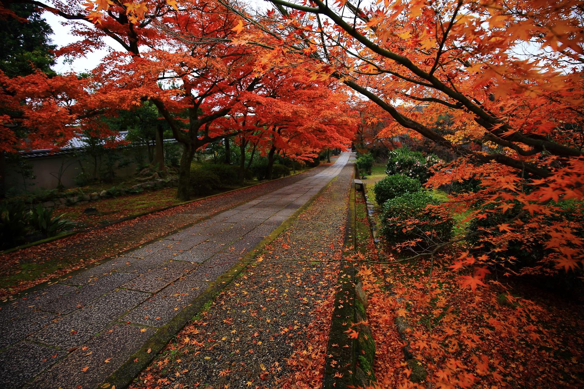 養源院の玄関前から眺めた参道の鮮やかな紅葉と散り紅葉