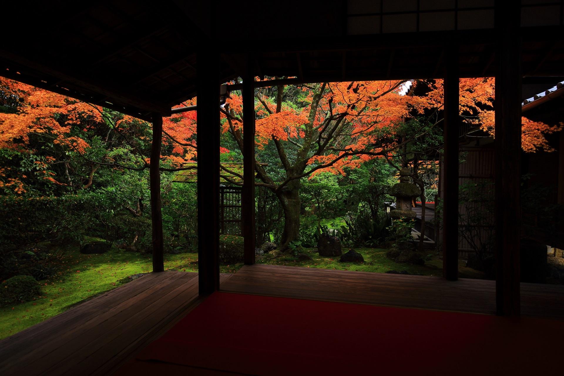 書院奥から眺めた晩秋の侘の庭