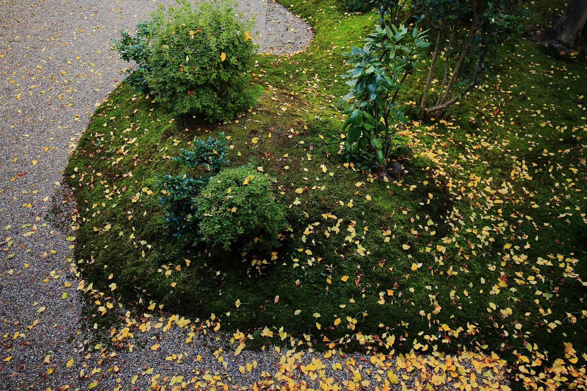 龍華庭園の緑の苔や植物を彩る華やかな黄色い散り銀杏