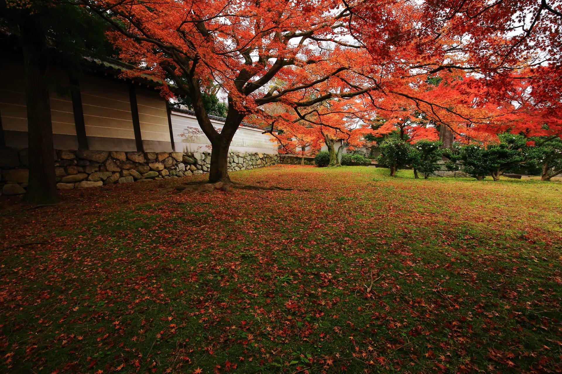 緑の芝生を華やぐ散り紅葉と浮かび上がるような紅葉