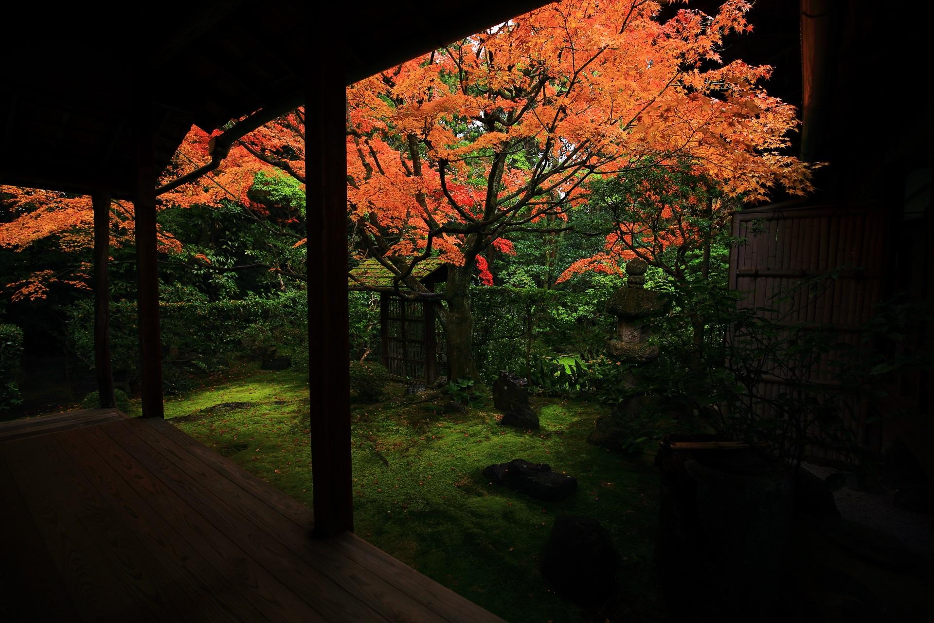 高画質 紅葉 写真 桂春院 侘の庭