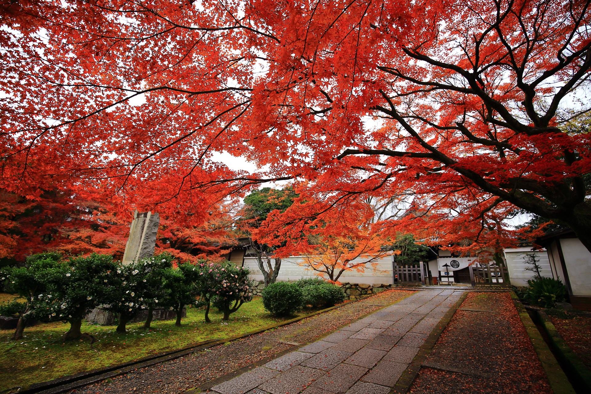 晩秋の養源院を彩る圧巻の紅葉