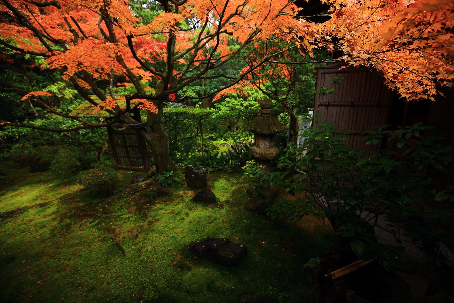 趣きある桂春院の緑の庭園をつつむ秋色の紅葉