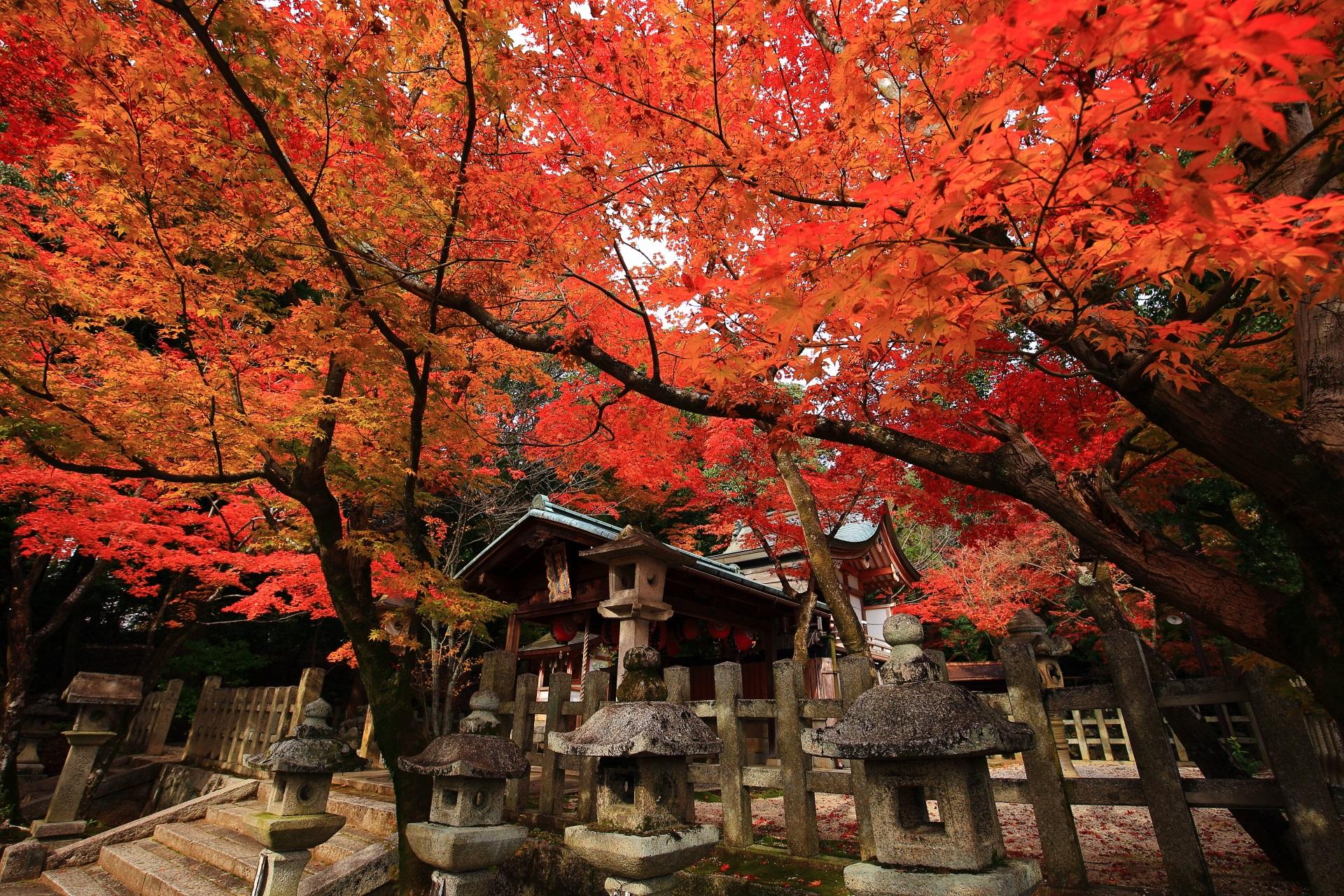 秋色につつまれる本殿や建ち並ぶ燈籠