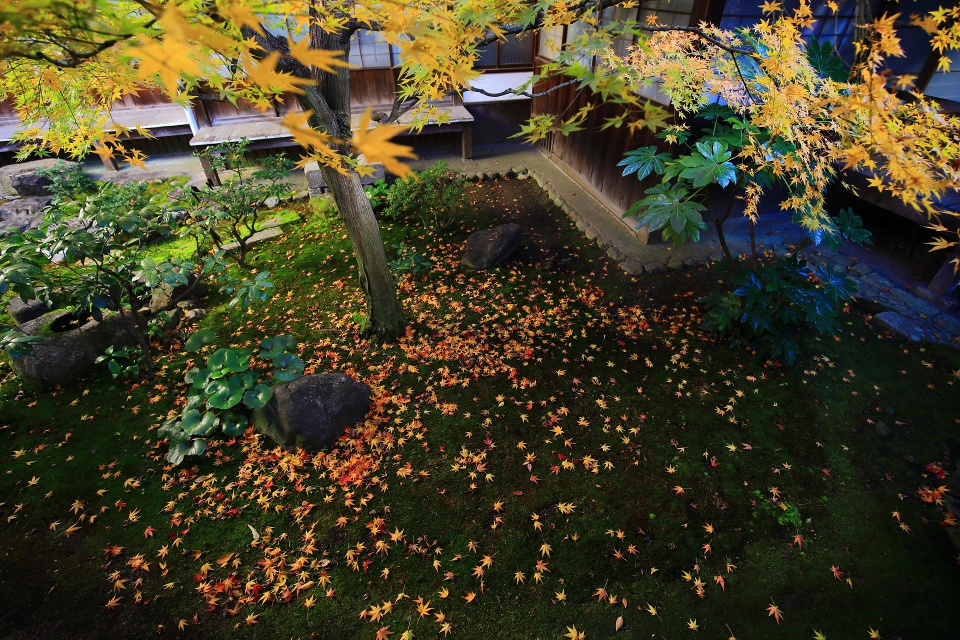 本法寺の美しく深い緑の苔を染めるオレンジ色や黄色の散り紅葉