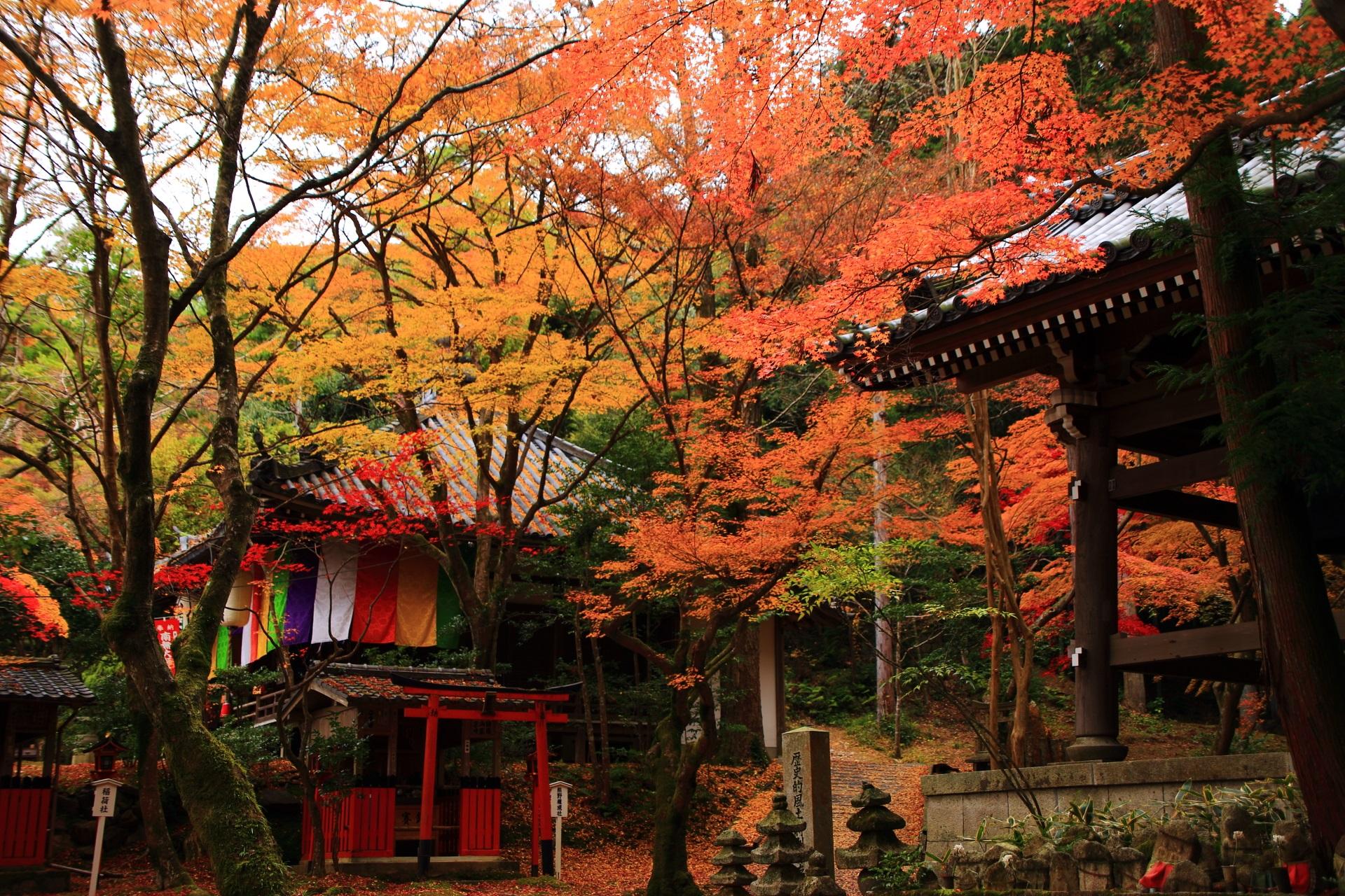 高画質 写真 紅葉 今熊野観音寺