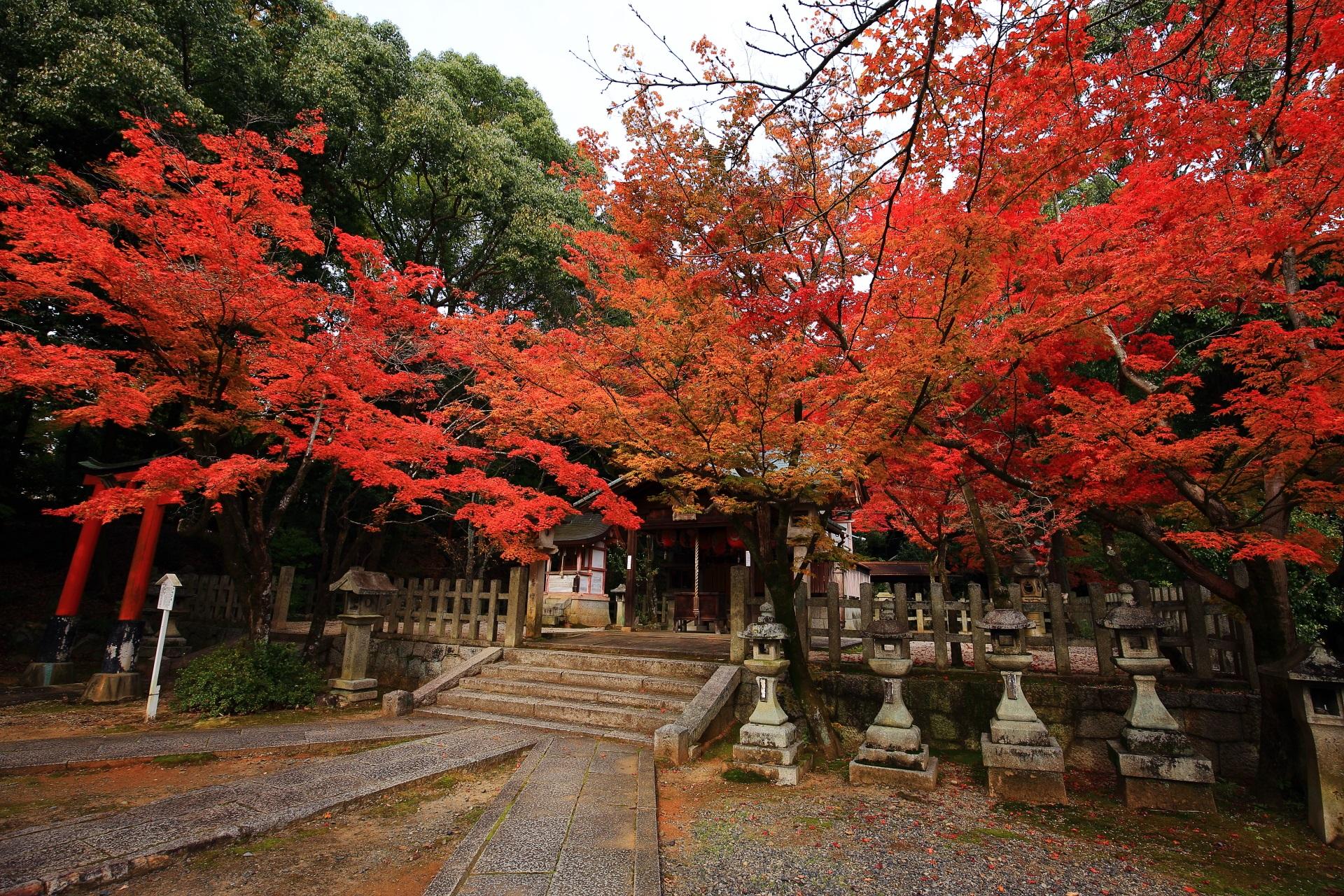 竹中稲荷神社の素晴らしい紅葉と秋の情景