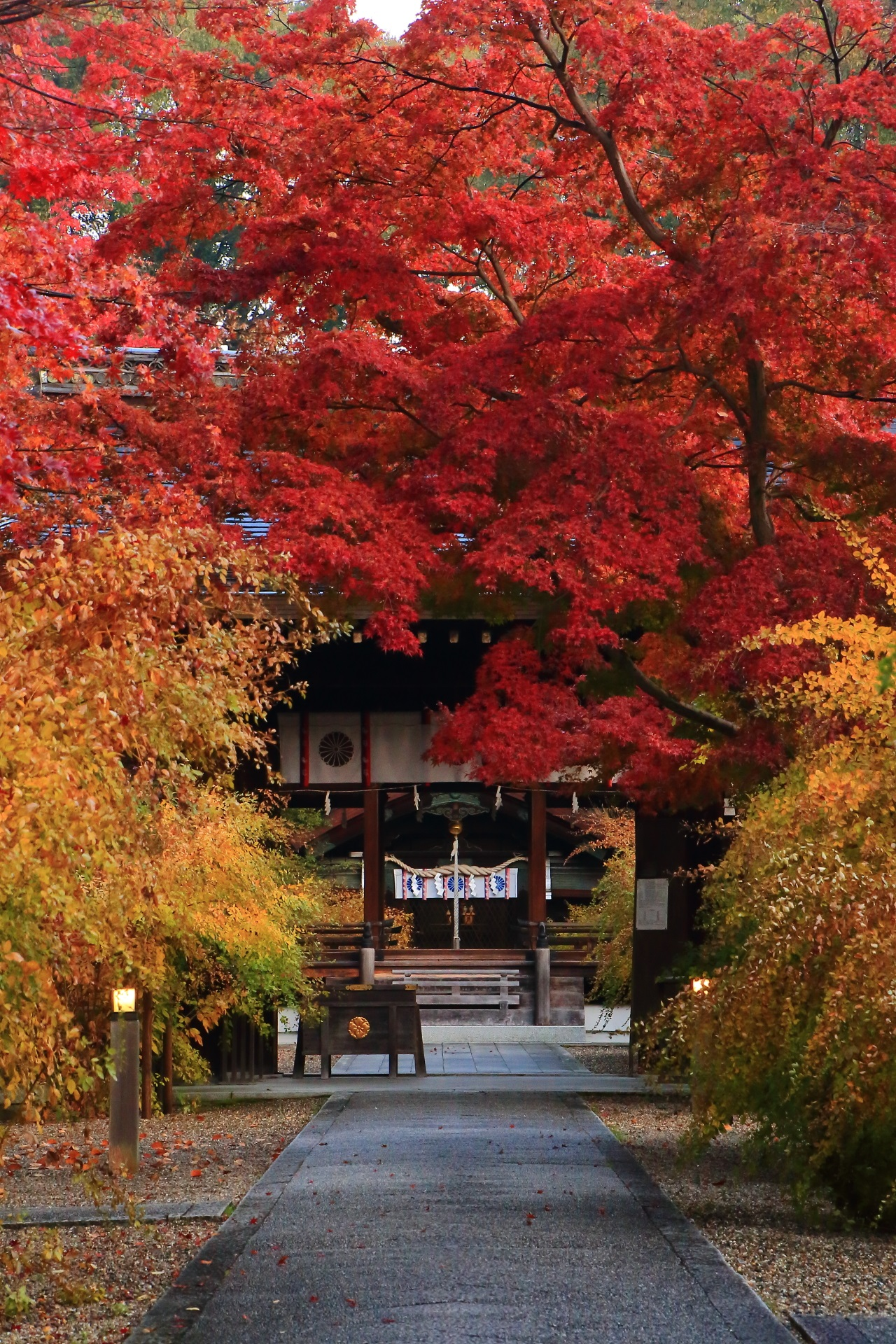 神門と参道を彩る溢れんばかりの燃えるような赤い紅葉